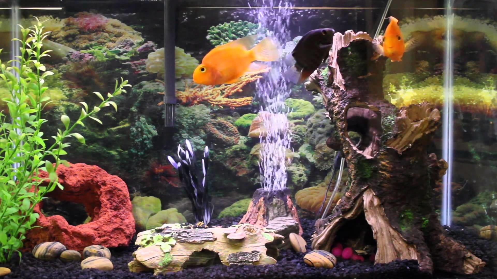 Live aquarium wallpapers for windows 81 43 images for Fish tank screen