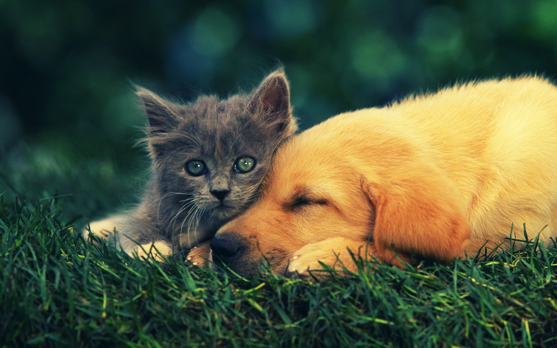 1920x1200 Cute Baby Dogs And Cats