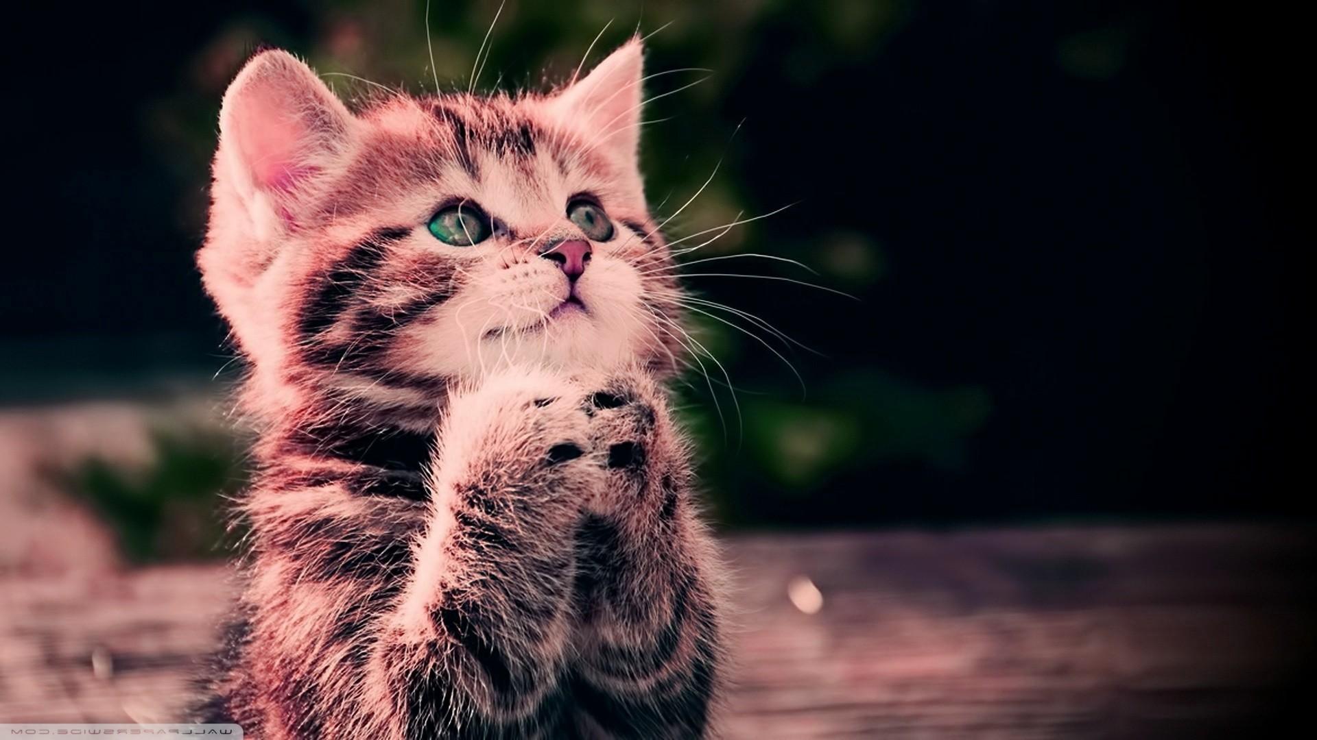 Imágenes De Animales En Hd Para Fondo De Pantalla: Descargar Wallpaper Para Computadoras Gratis (59+ Images