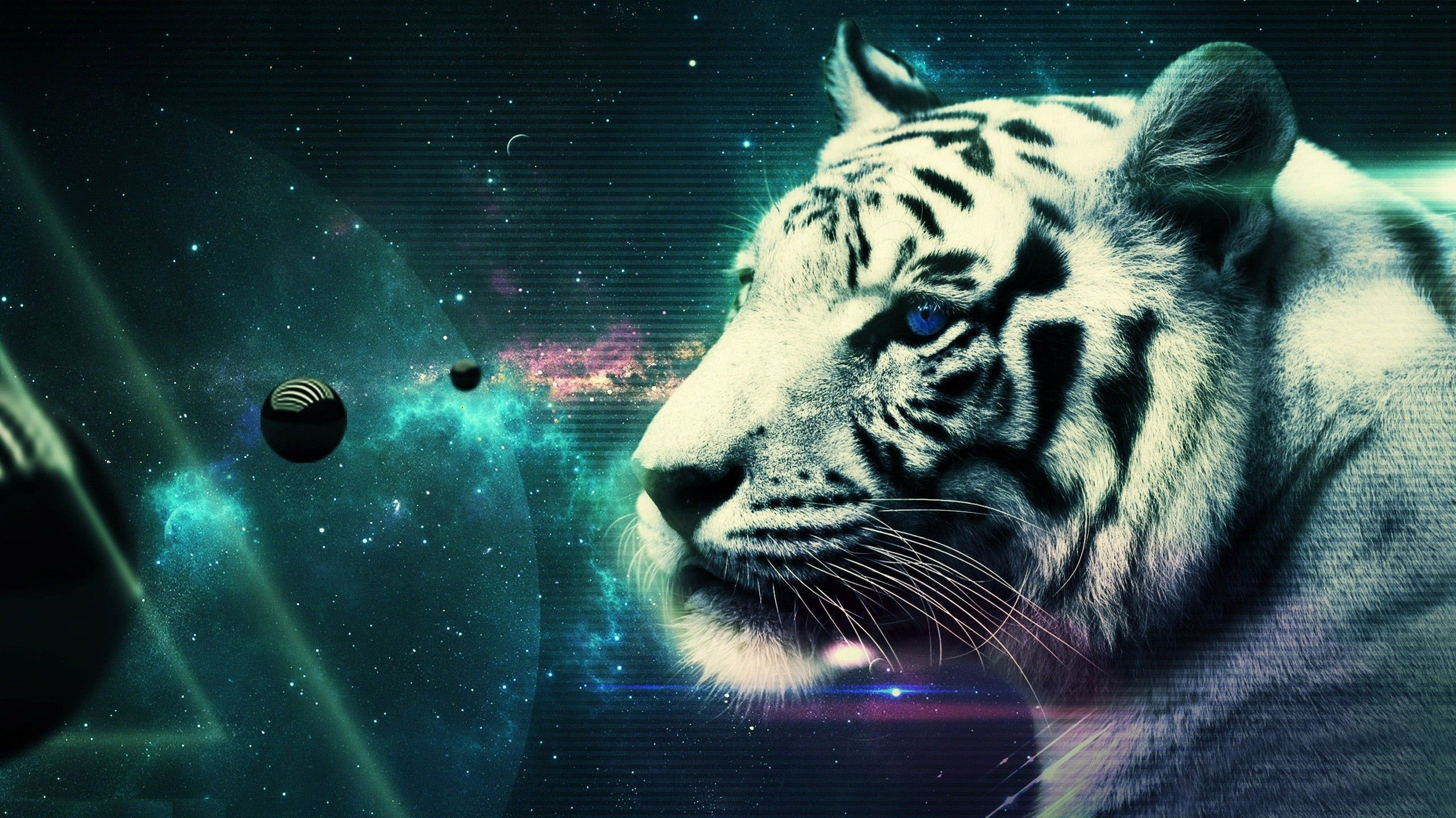 2560x1440 free cool wallpapers of tigers with cool wall papers.