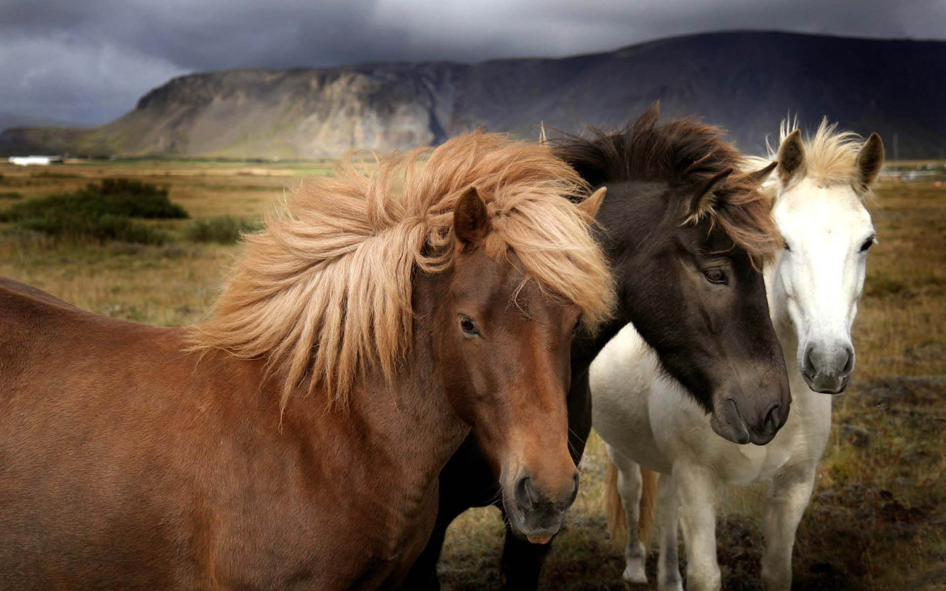 1920x1200 Beautiful Wild Horses Wallpaper | HD Animals and Birds Wallpaper Free  Download ...