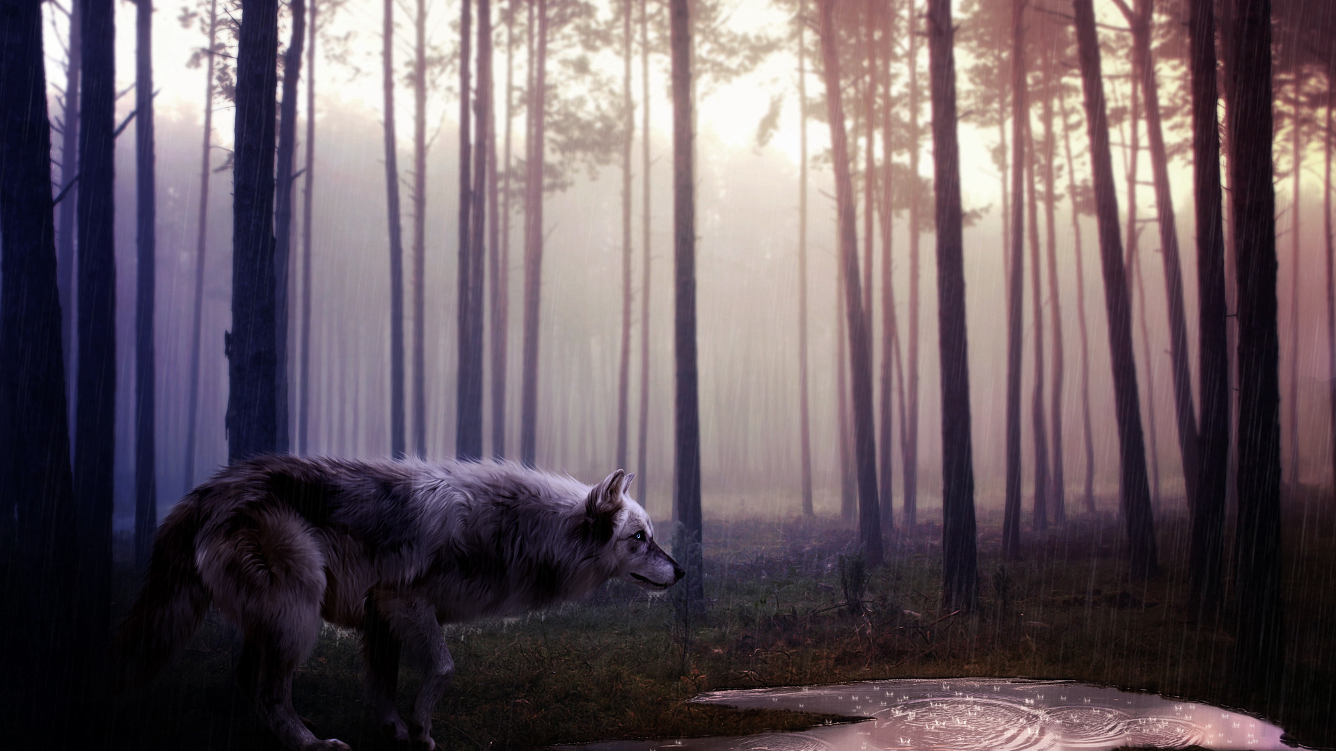 1920x1080 Wolf Wallpapers HD A30