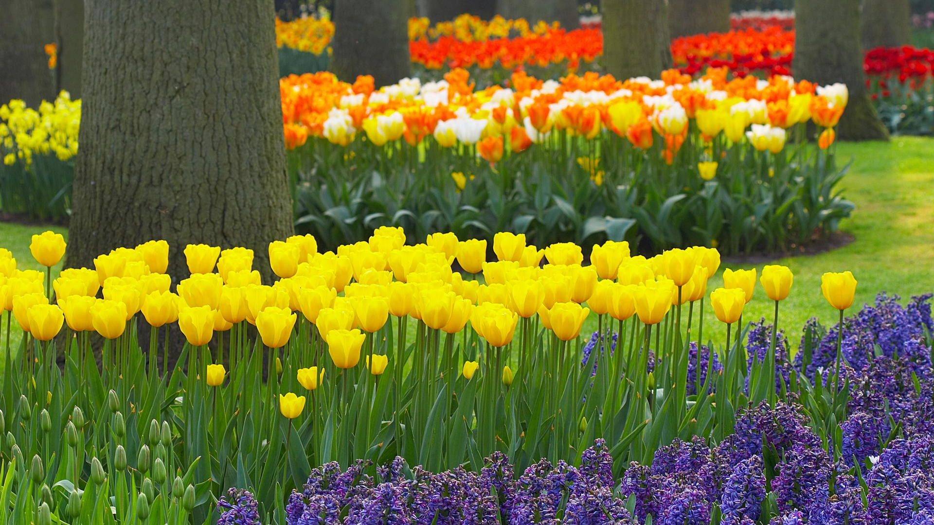 1920x1080 hd flower garden wallpaper. Â«Â«