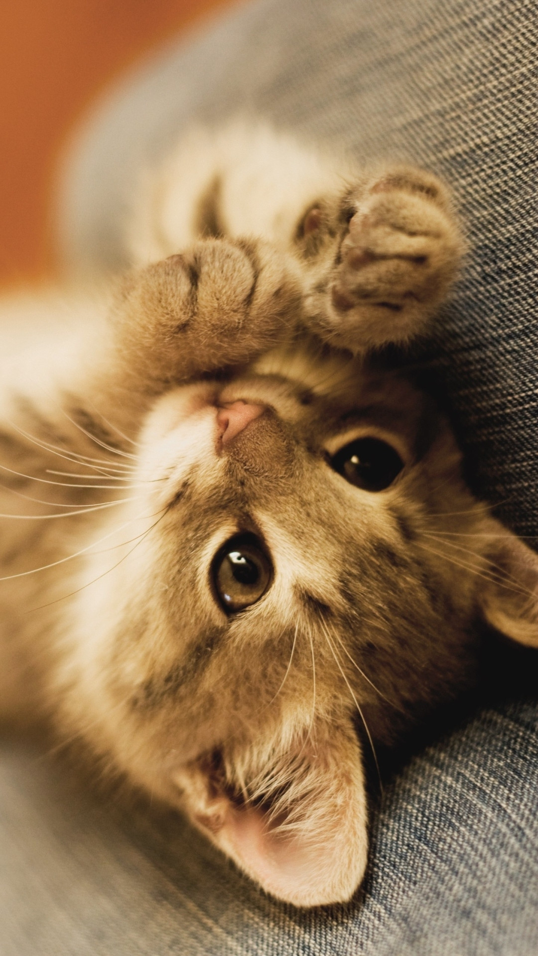 1920x1080 Pictures Of Cute Kittens Wallpapers 68
