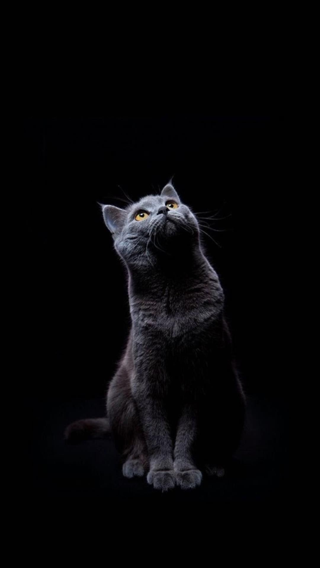 Cute Cat Iphone Wallpaper 87 Images