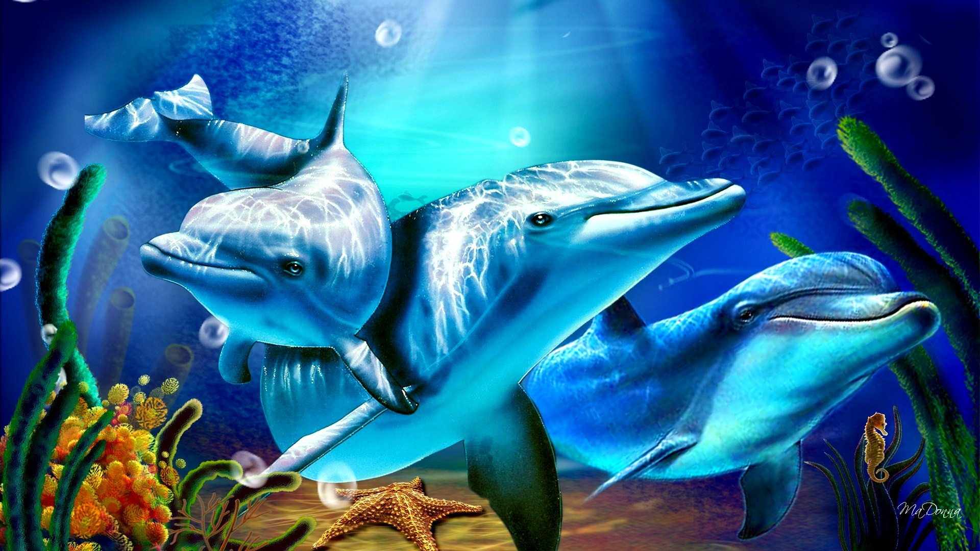 1920x1080 Dolphin Sunbeams Exclusive HD Wallpapers #5879
