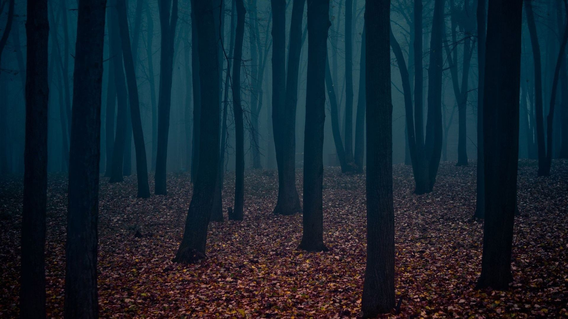 1920x1080 Dark Forest Wallpapers Wallpaper Cave Dark Forest Wallpaper