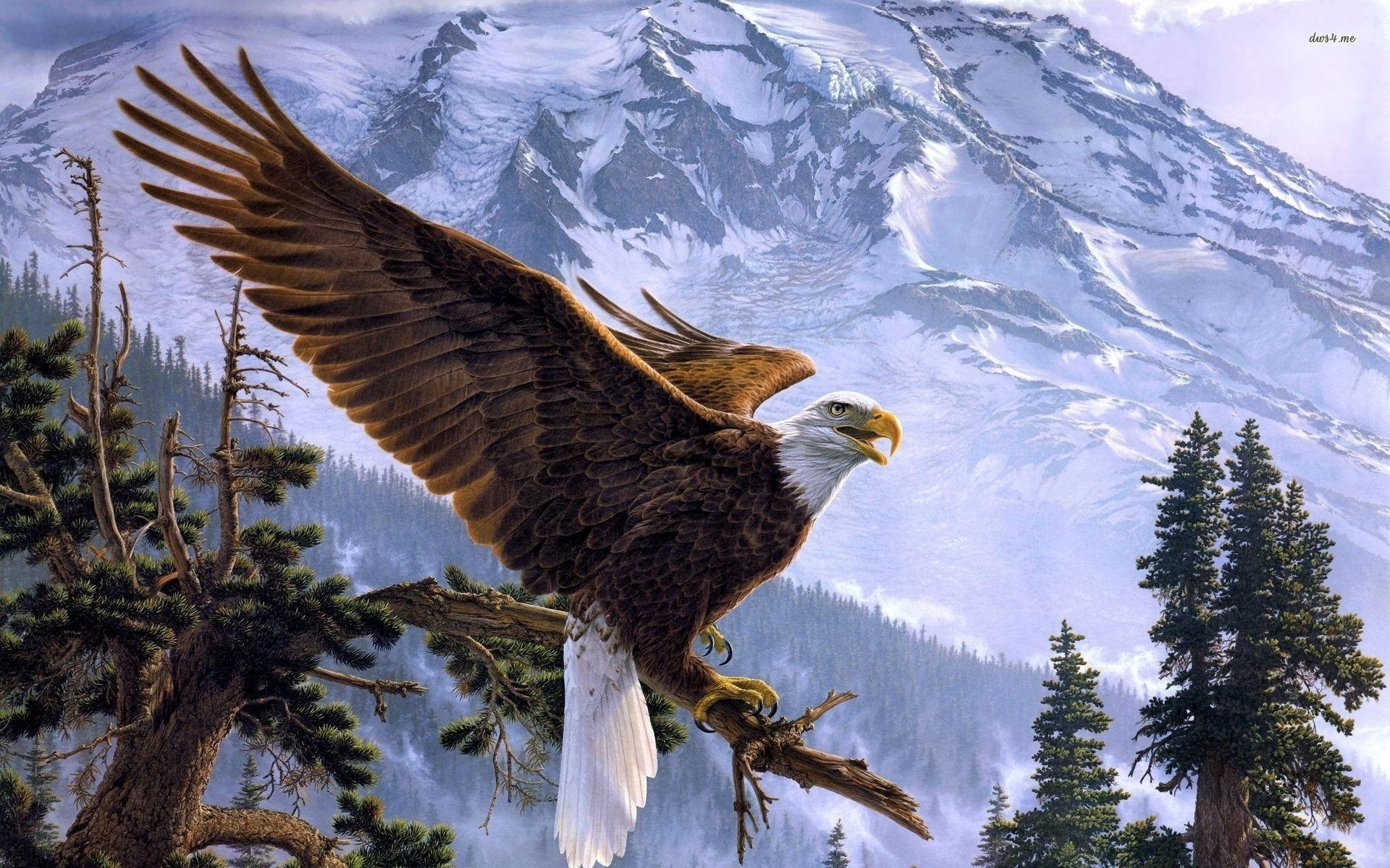 1920x1200 Free-Eagle-HD-Wallpapers-Download