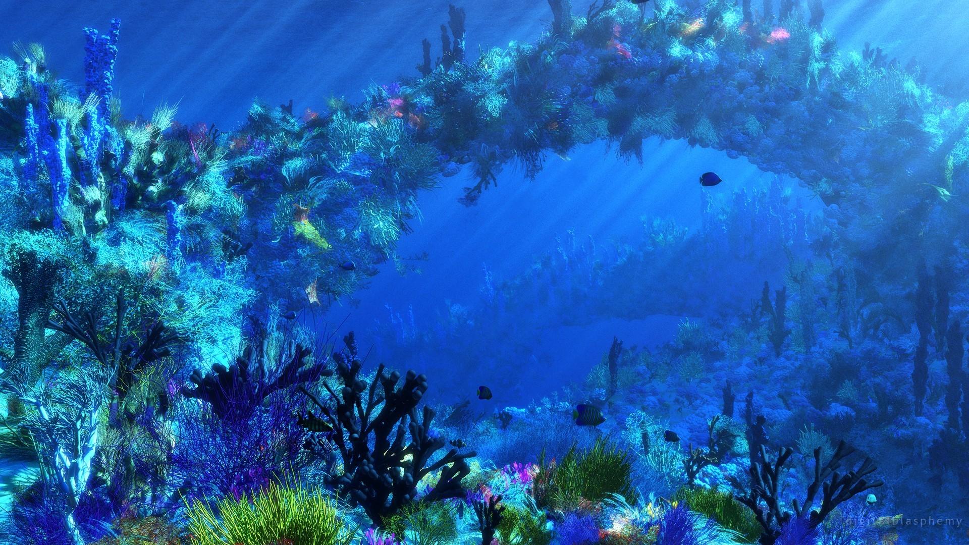 Underwater Backgrounds (66+ images) Pacific Ocean Underwater Animals