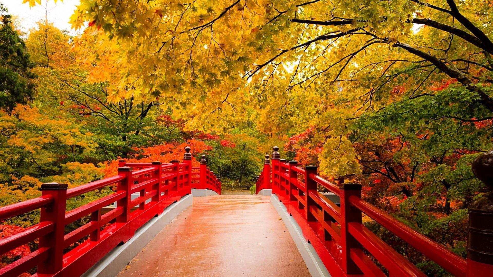 Autumn Screen Wallpaper (64+ images)