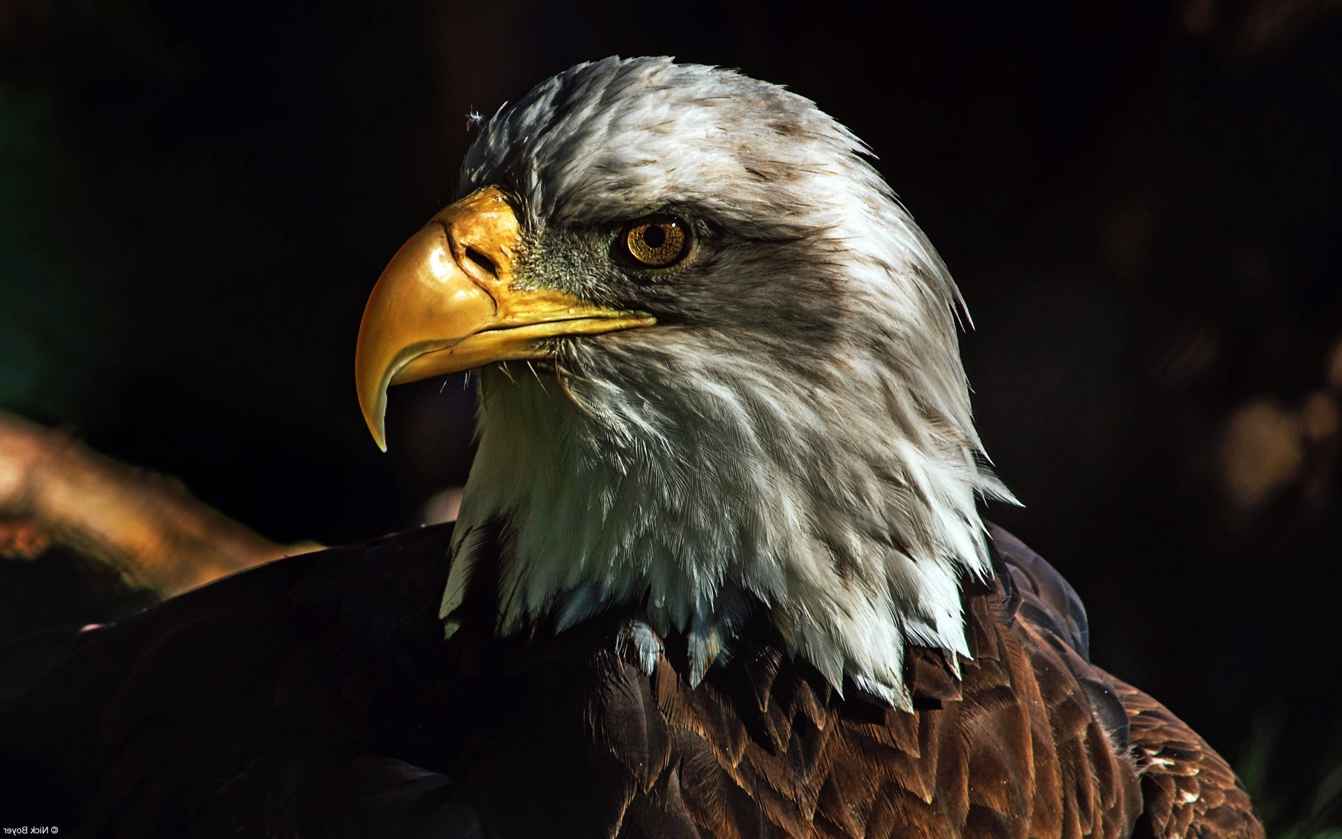 Eagle Bird Collection Of Wild Life Animals Wallpapers For: Eagle Wallpaper (81+ Images