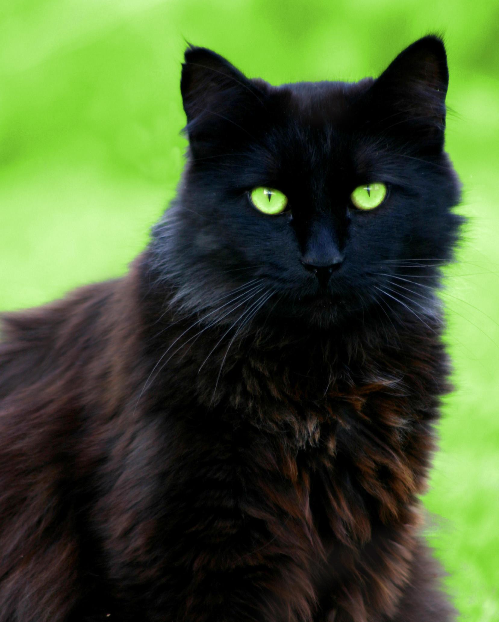 Black Cat Eyes Wallpaper (69+ Images