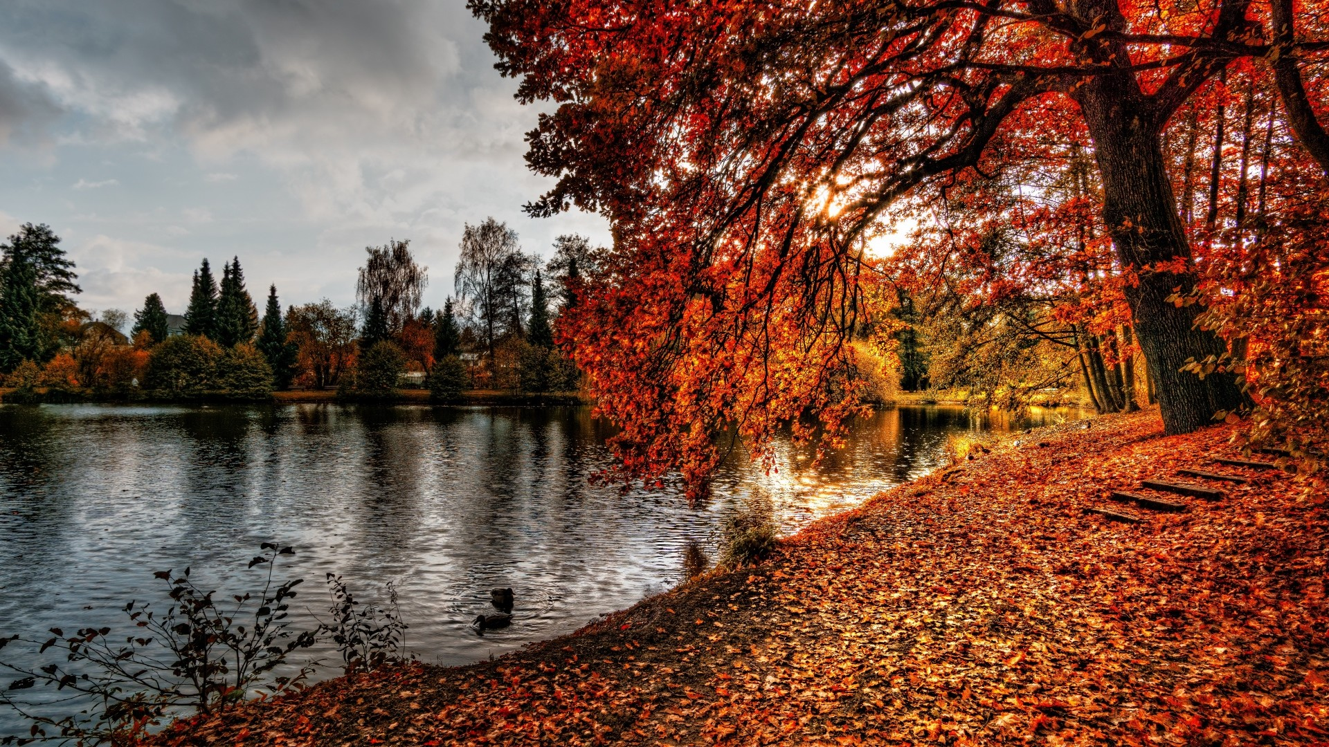 1920x1080  Wallpaper autumn, park, foliage, lake