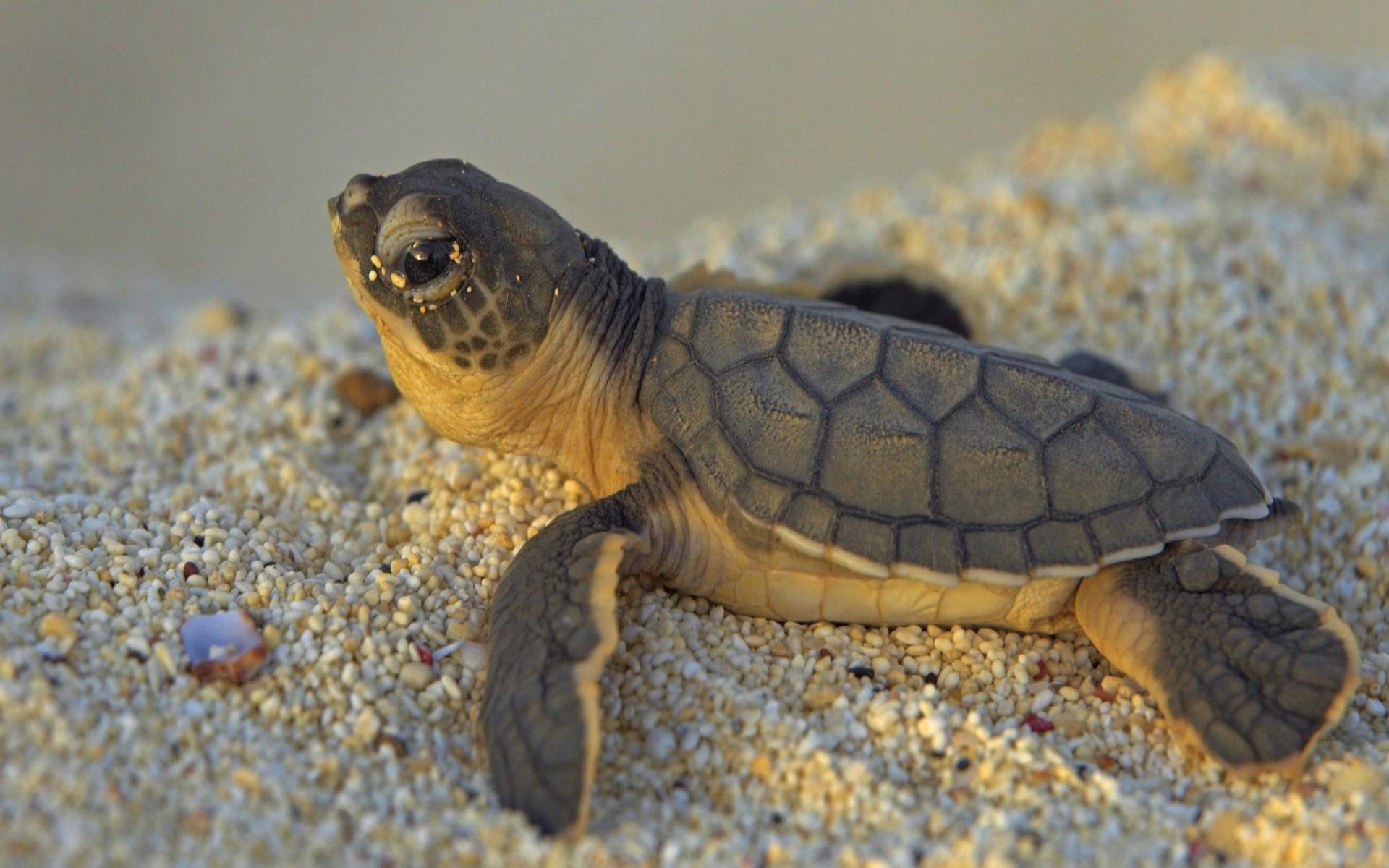 Cute turtle wallpaper 59 images - Cute turtle pics ...