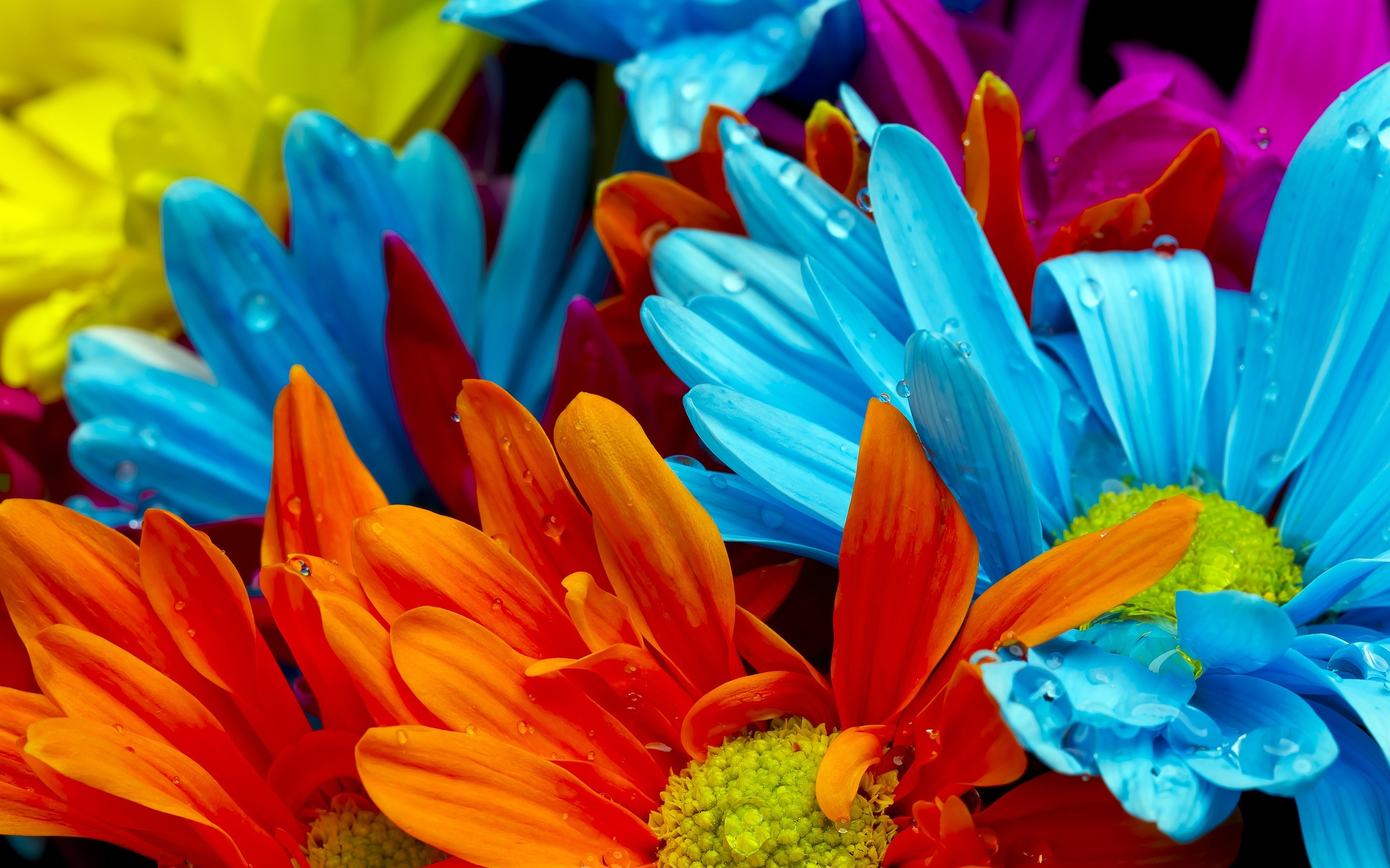 2560x1600 Colorful Flower Backgrounds