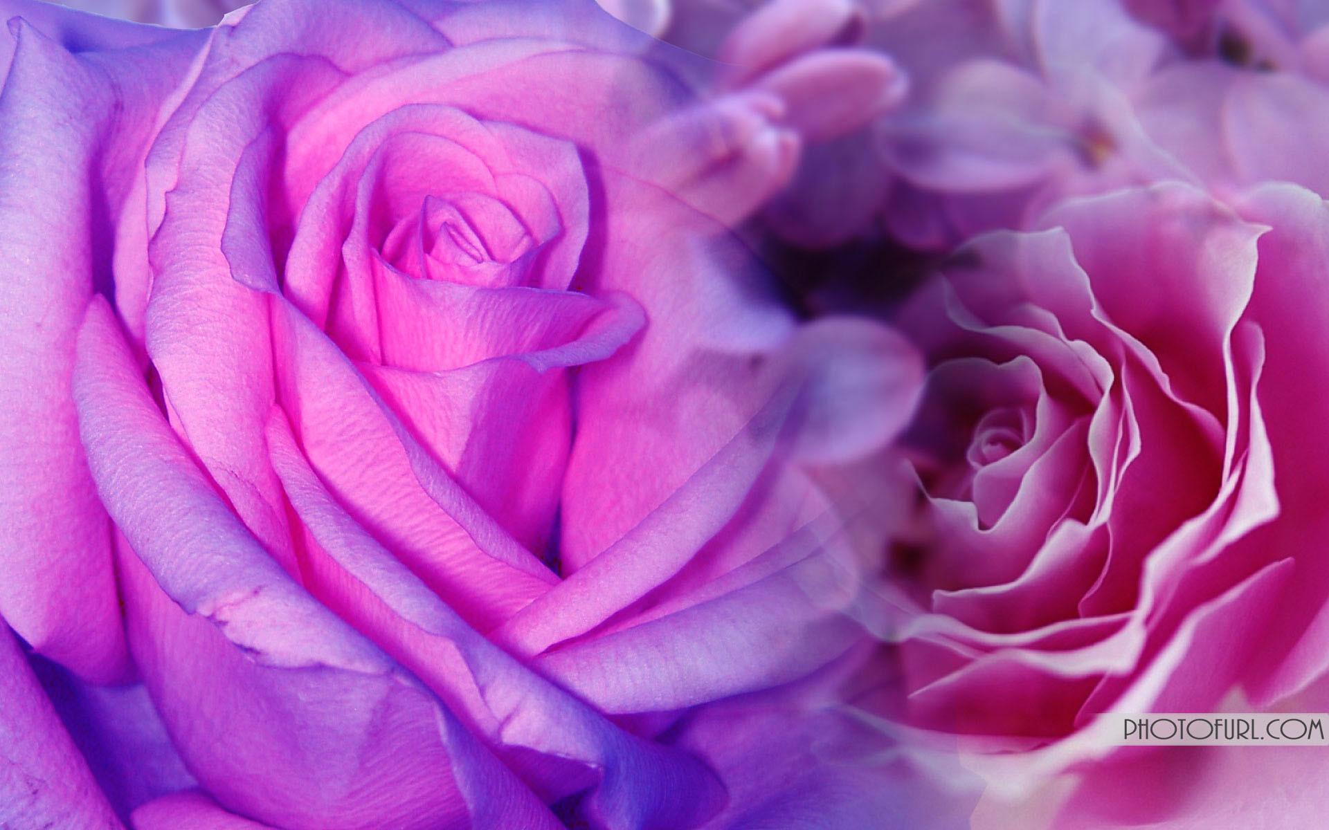 Purple flower background 66 images 1920x1200 pink purple flowers field wallpaper mightylinksfo