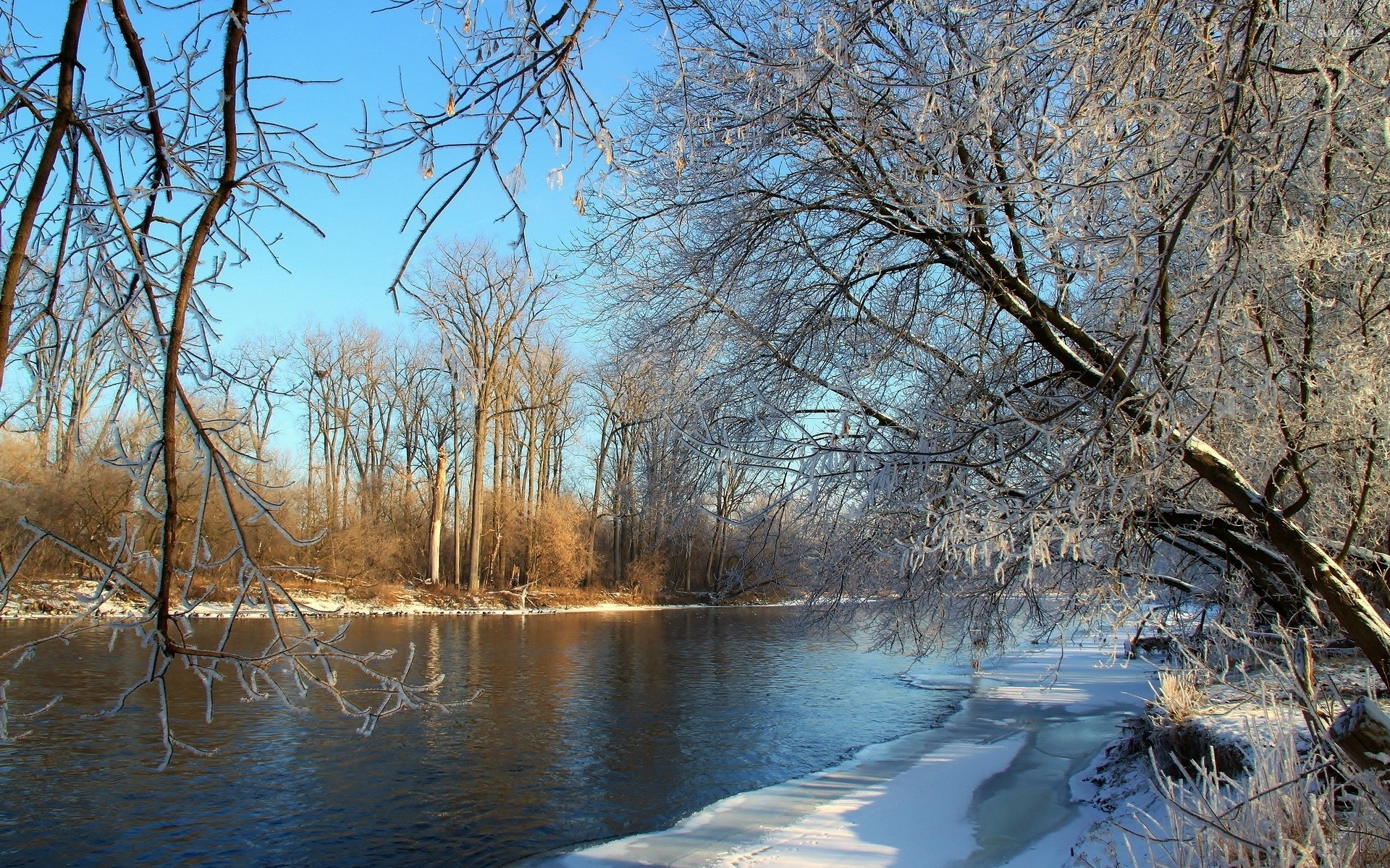 1920x1200 Frozen trees by the river on a sunny day wallpaper