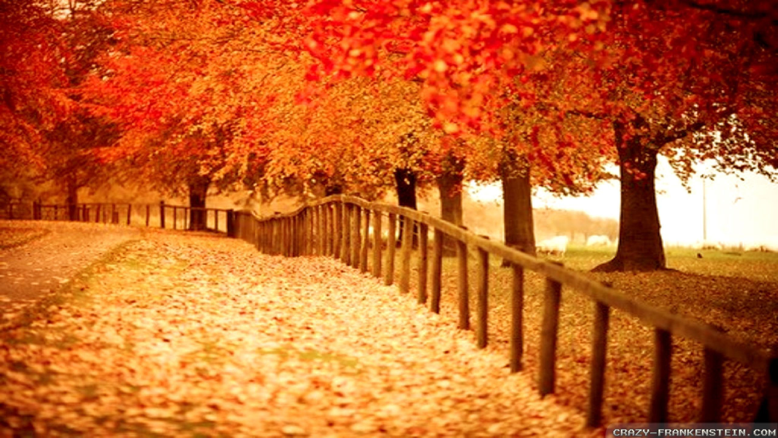 2560x1440 Fall Foliage Desktop Wallpaper 1280×1024 Fall Themed Desktop Backgrounds  (38 Wallpapers) |