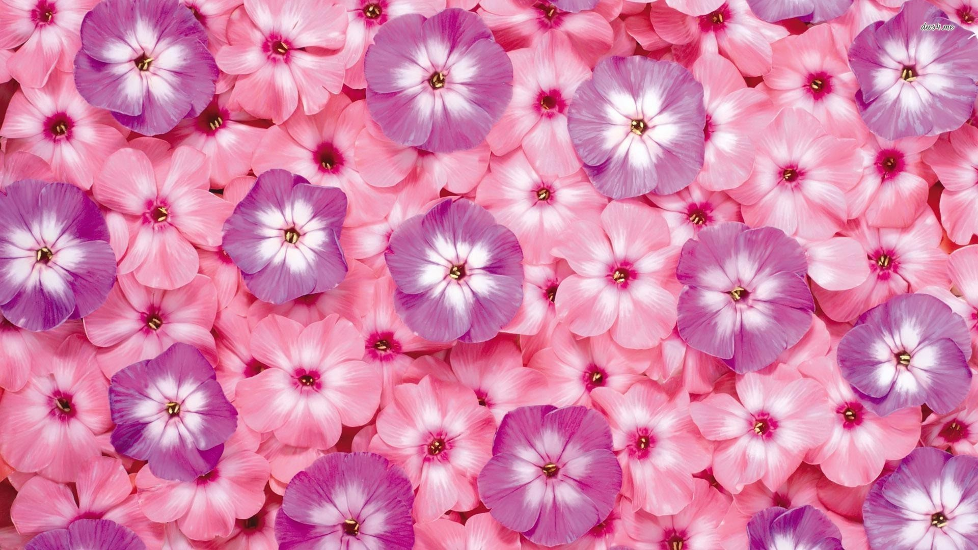 1920x1080 Small pink and purple flowers wallpaper 1280x800 Small pink and purple