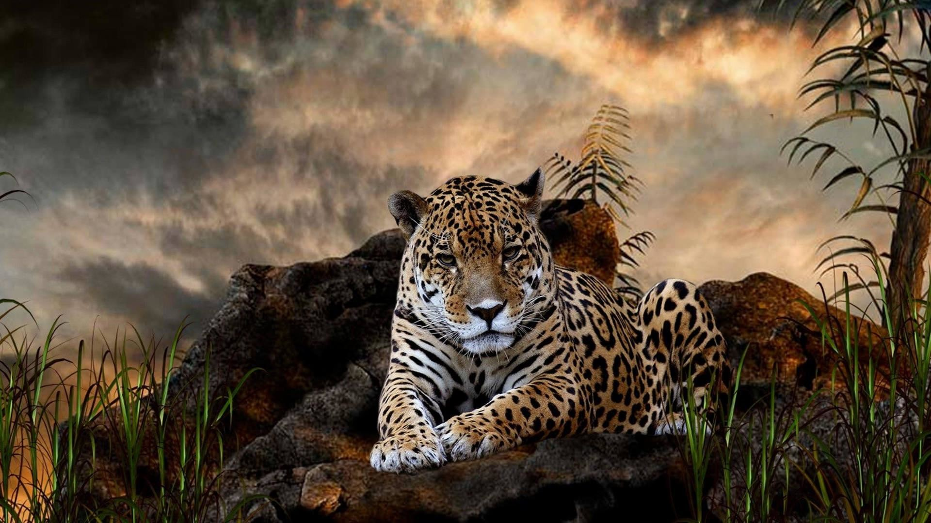 1920x1080 Wild-Leopard-Wallpaper-Full-HD-1080P
