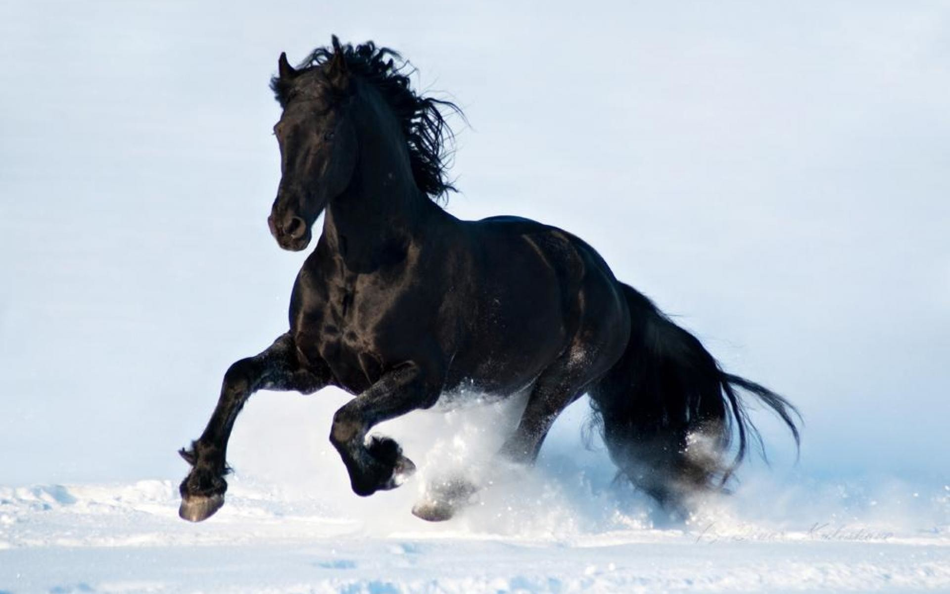 1920x1200 Wild Horse Wallpapers - Wallpaper Cave
