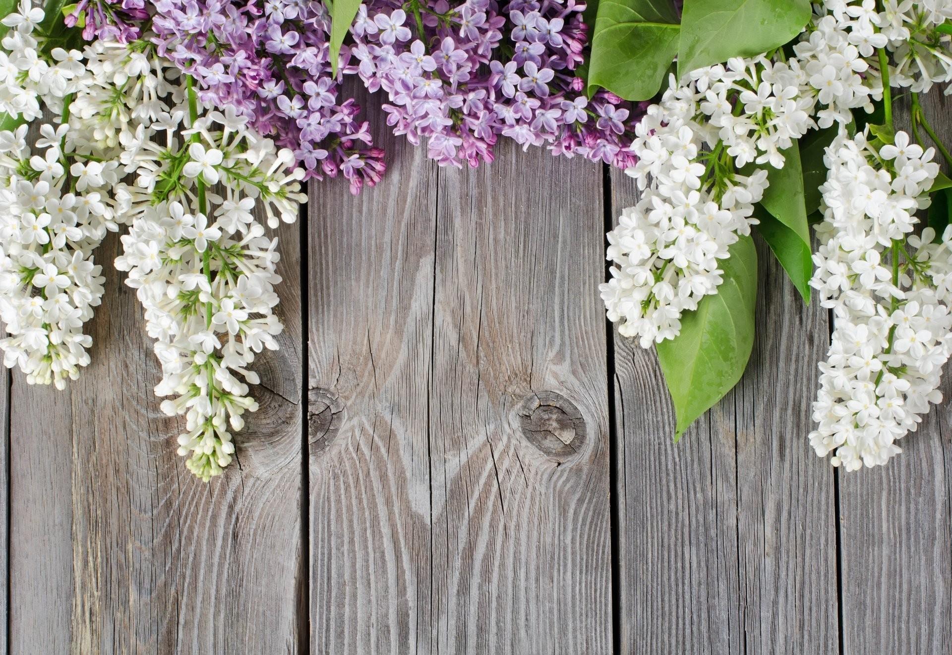 Цветы деревца и фото