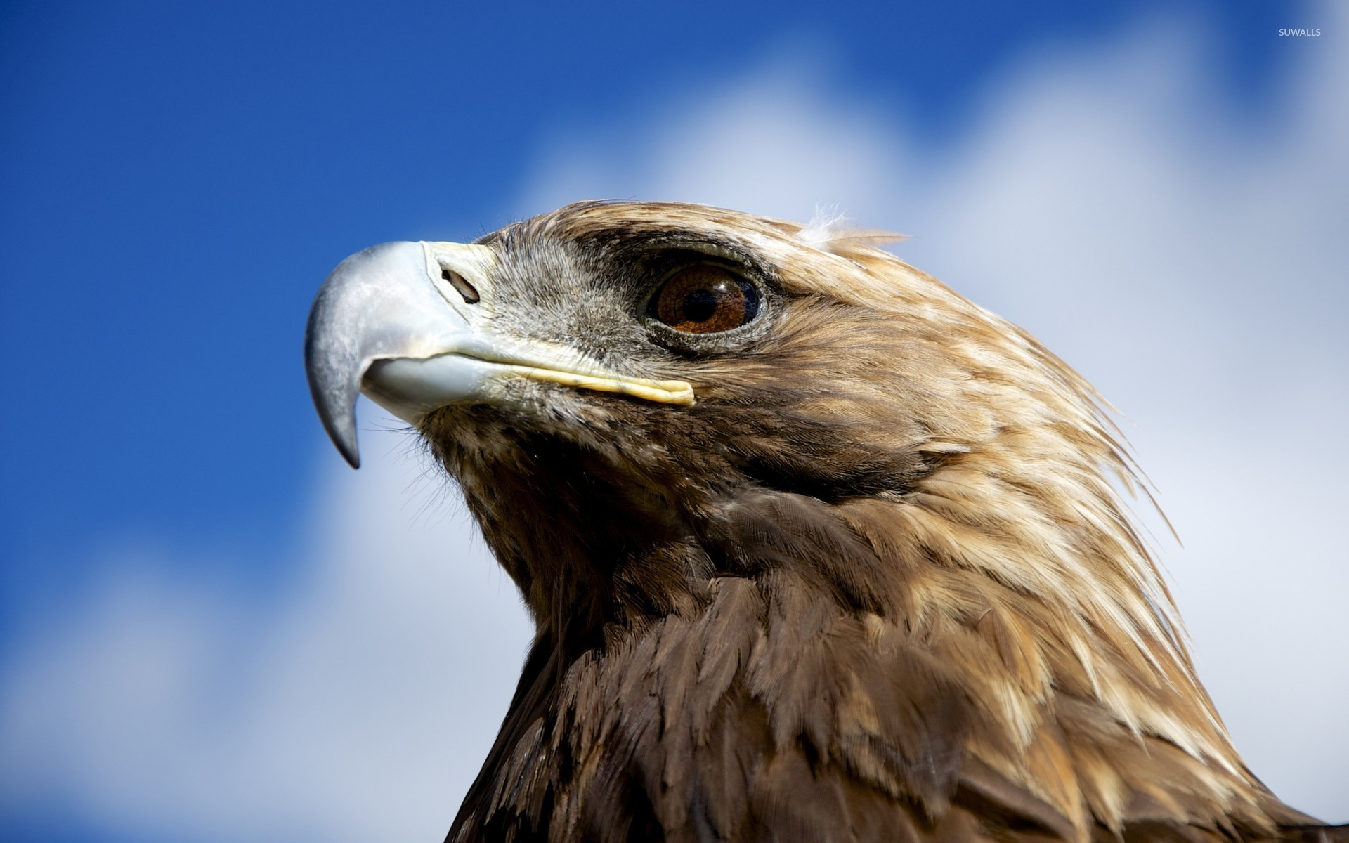 1920x1200 golden eagle wallpaper