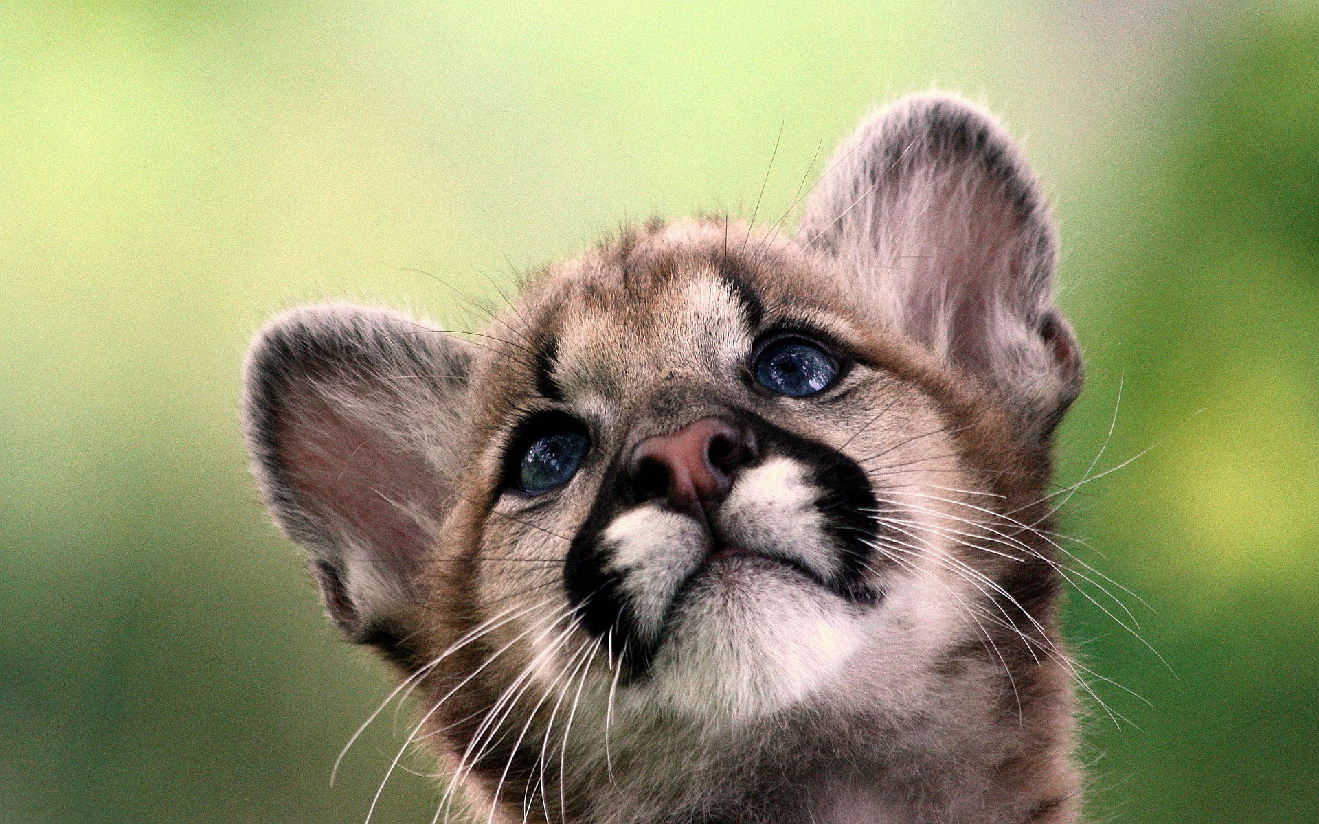 cute baby fox wallpaper 54 images On adorable wallpapers