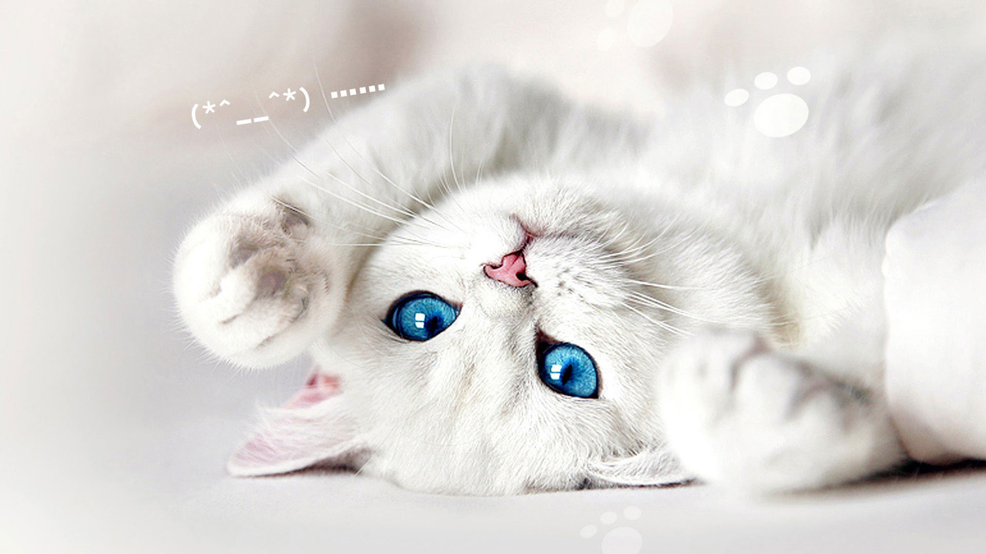 white cat wallpaper 76 images