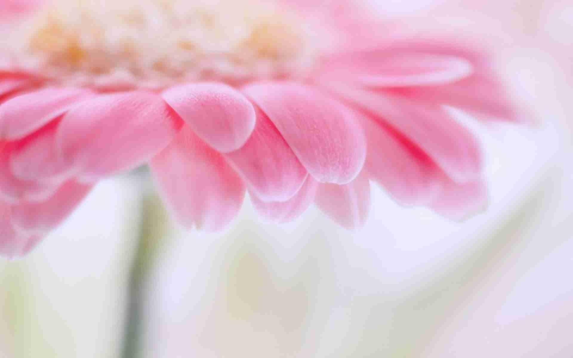 1080x1920 Pink Flower Bokeh Macro IPhone 6 Wallpaper