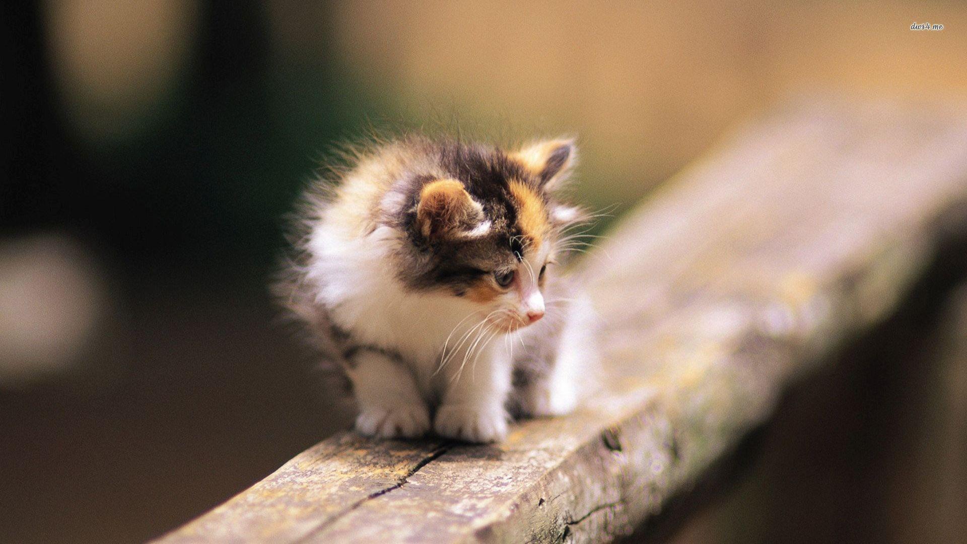Cute Cat Wallpapers For Desktop