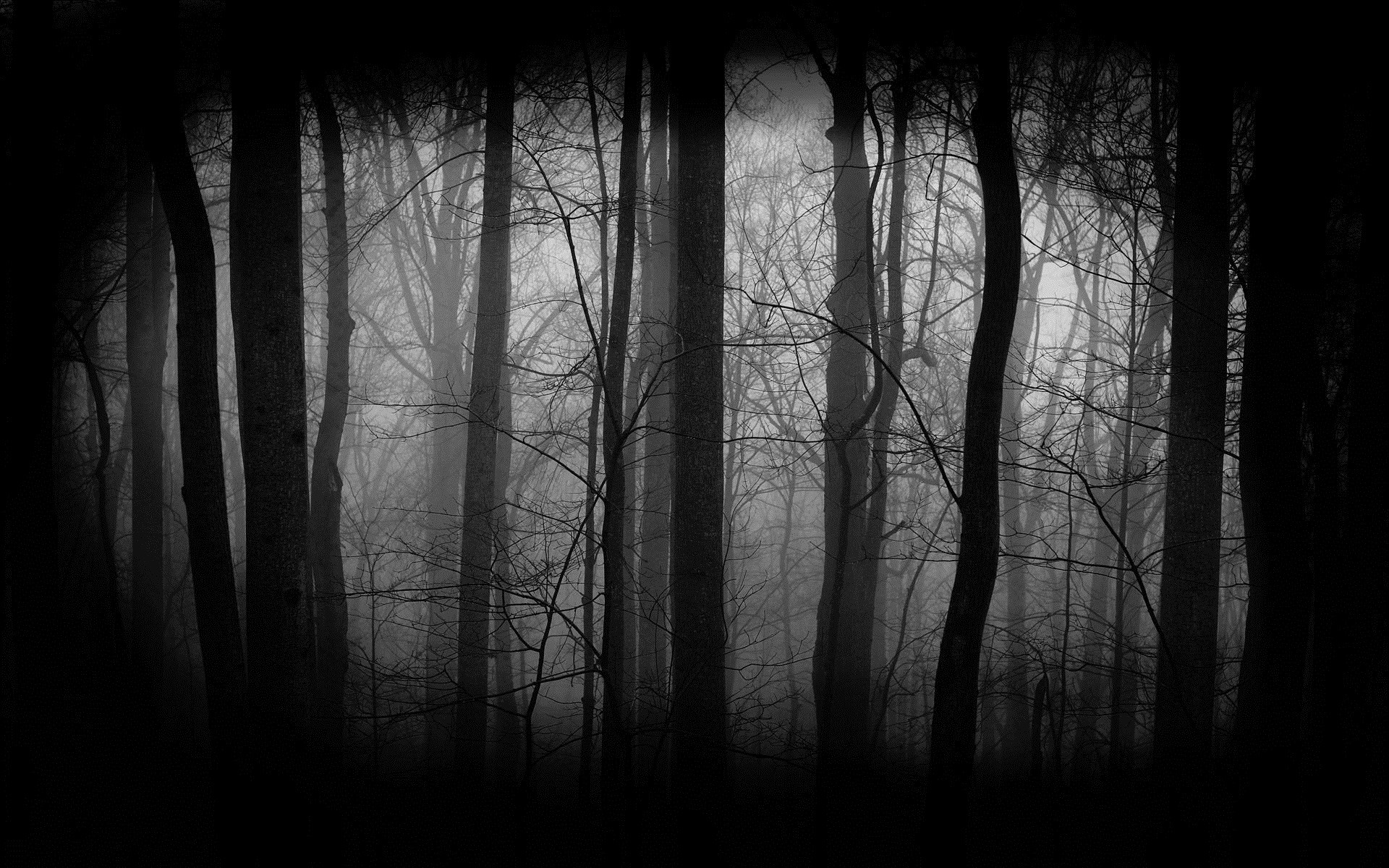 1920x1200 Dark Forest HD wallpaper