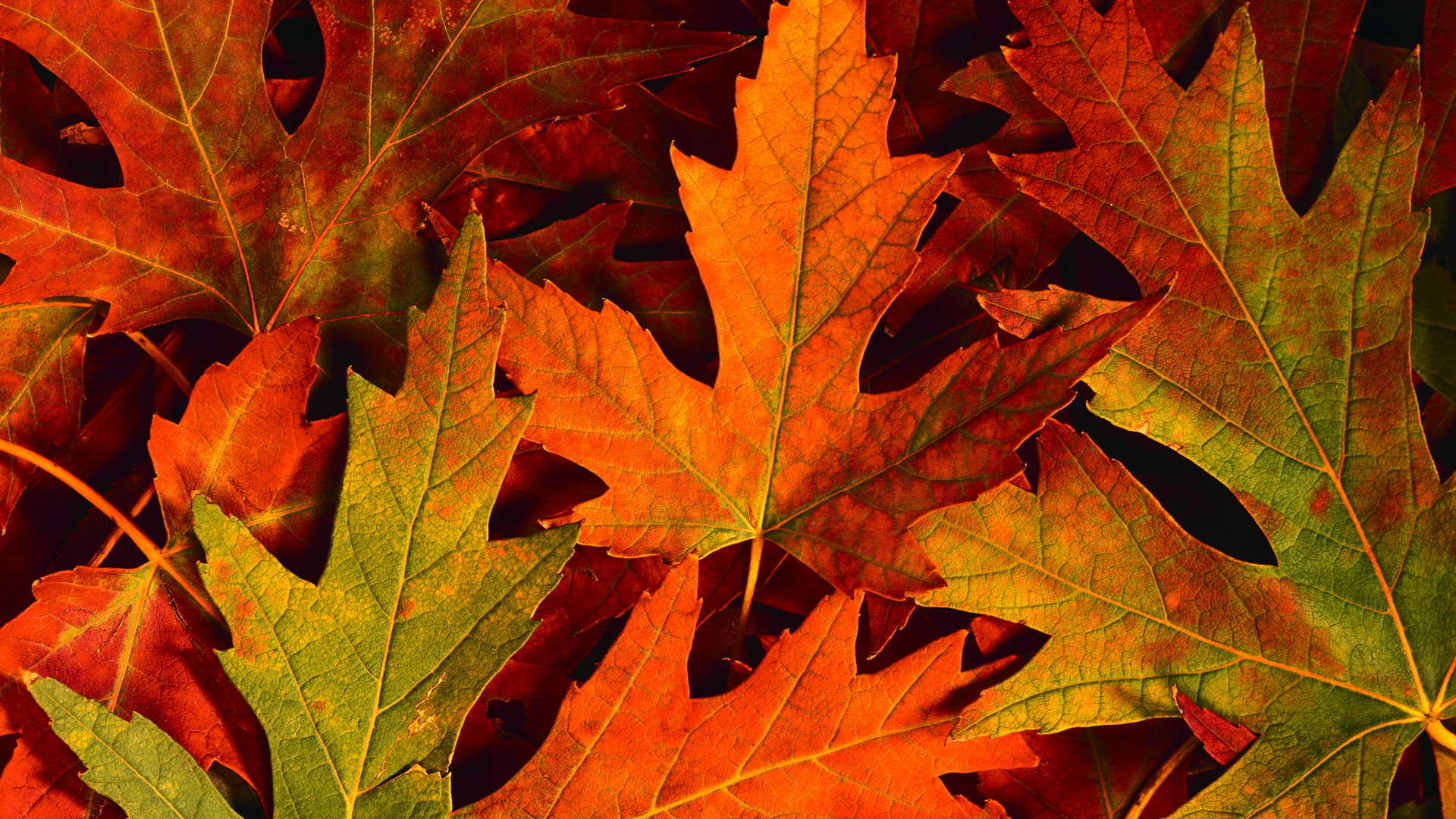 Fall Leaves Desktop Wallpaper (59+ images)