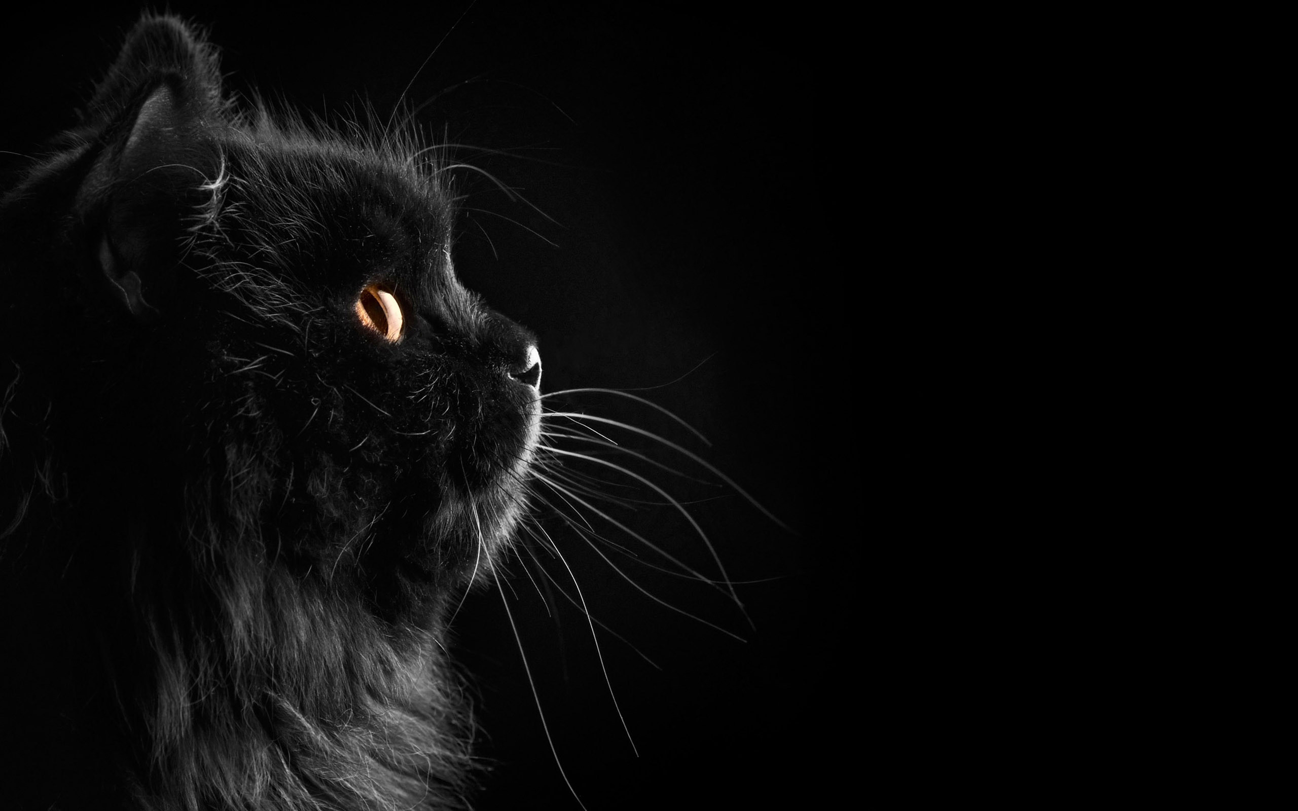 2560x1600 Black Cat Wallpaper 24160  px ~ HDWallSource.com · black cats and  kittens ...