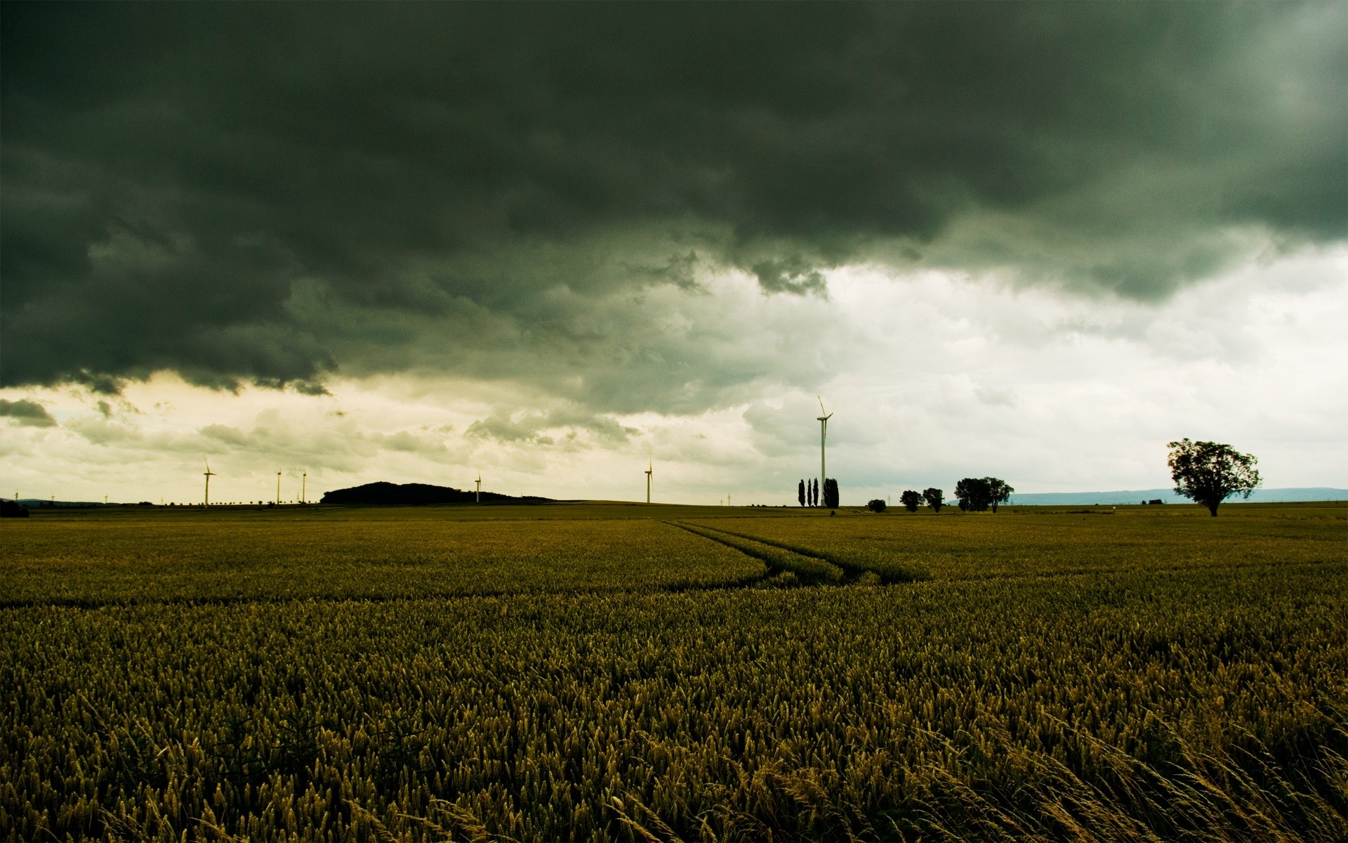 1920x1200 Gloomy Wheat Field Stormy Sky wallpapers and stock photos