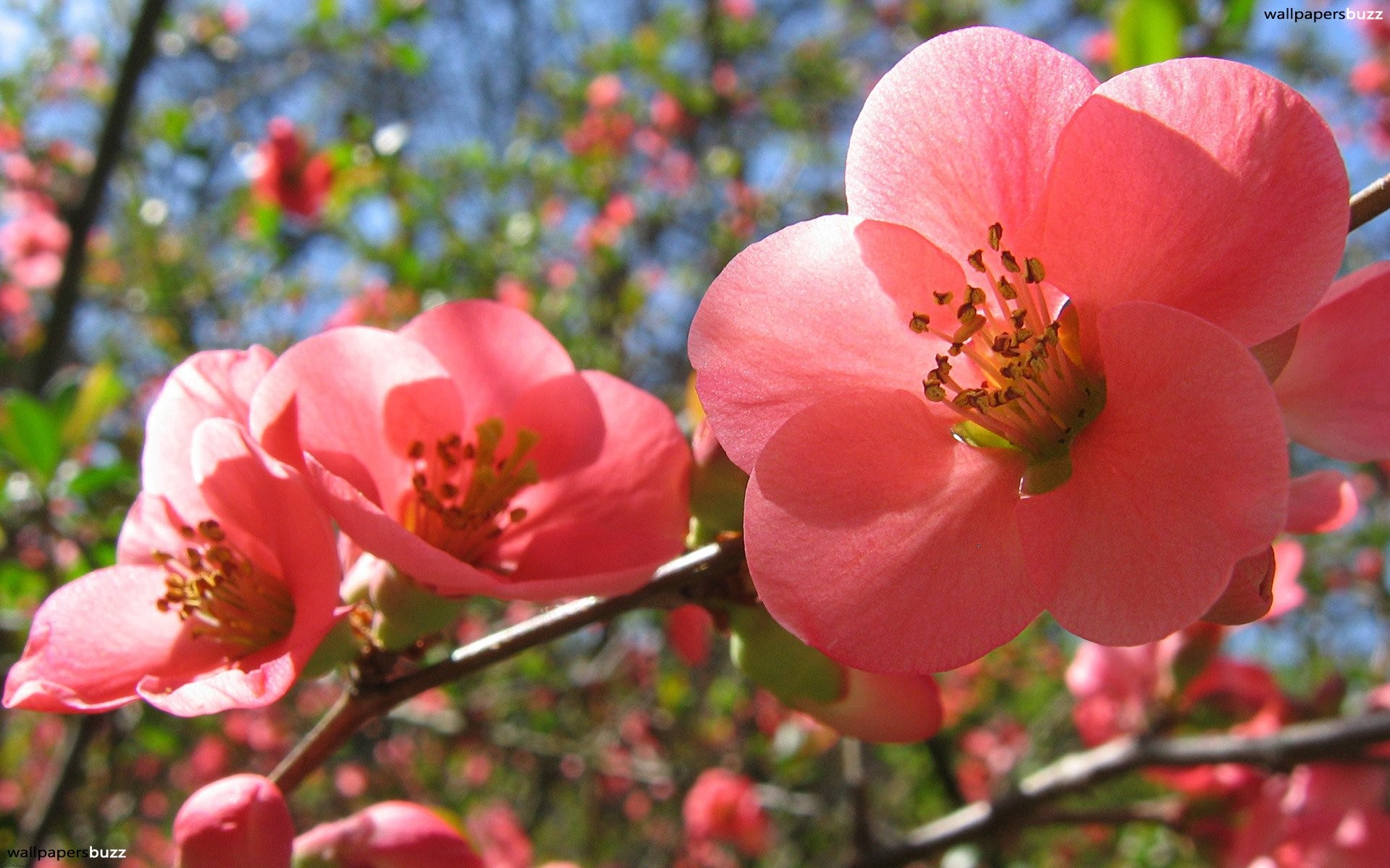Spring wallpaper and screensavers 52 images 1920x1080 wallpaper spring mightylinksfo