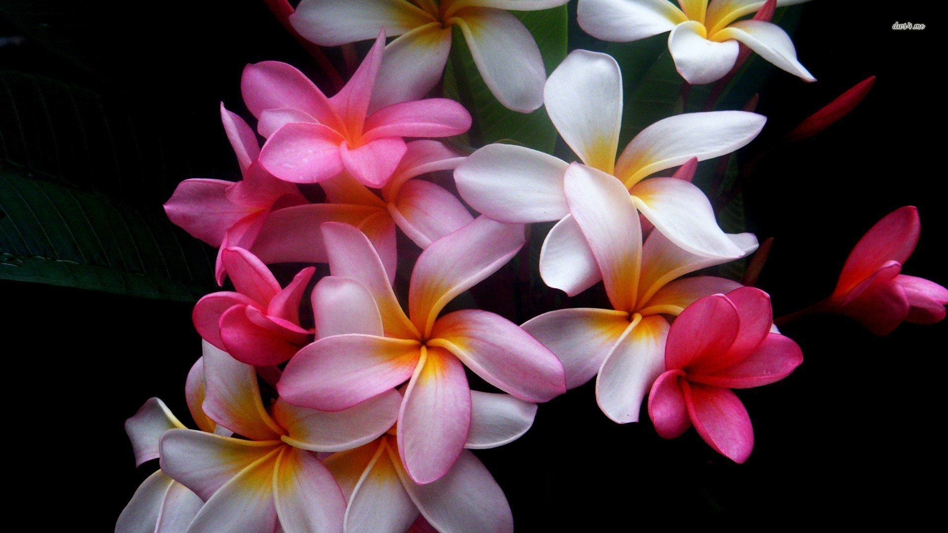 Lilly Flower Meaning  Flower Meaning
