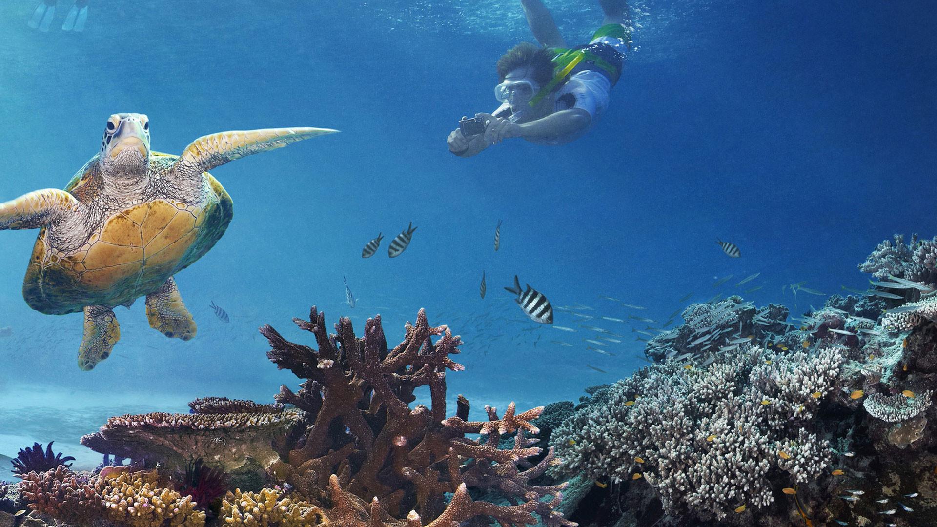 Coral reef live wallpaper 59 images - Great barrier reef desktop background ...