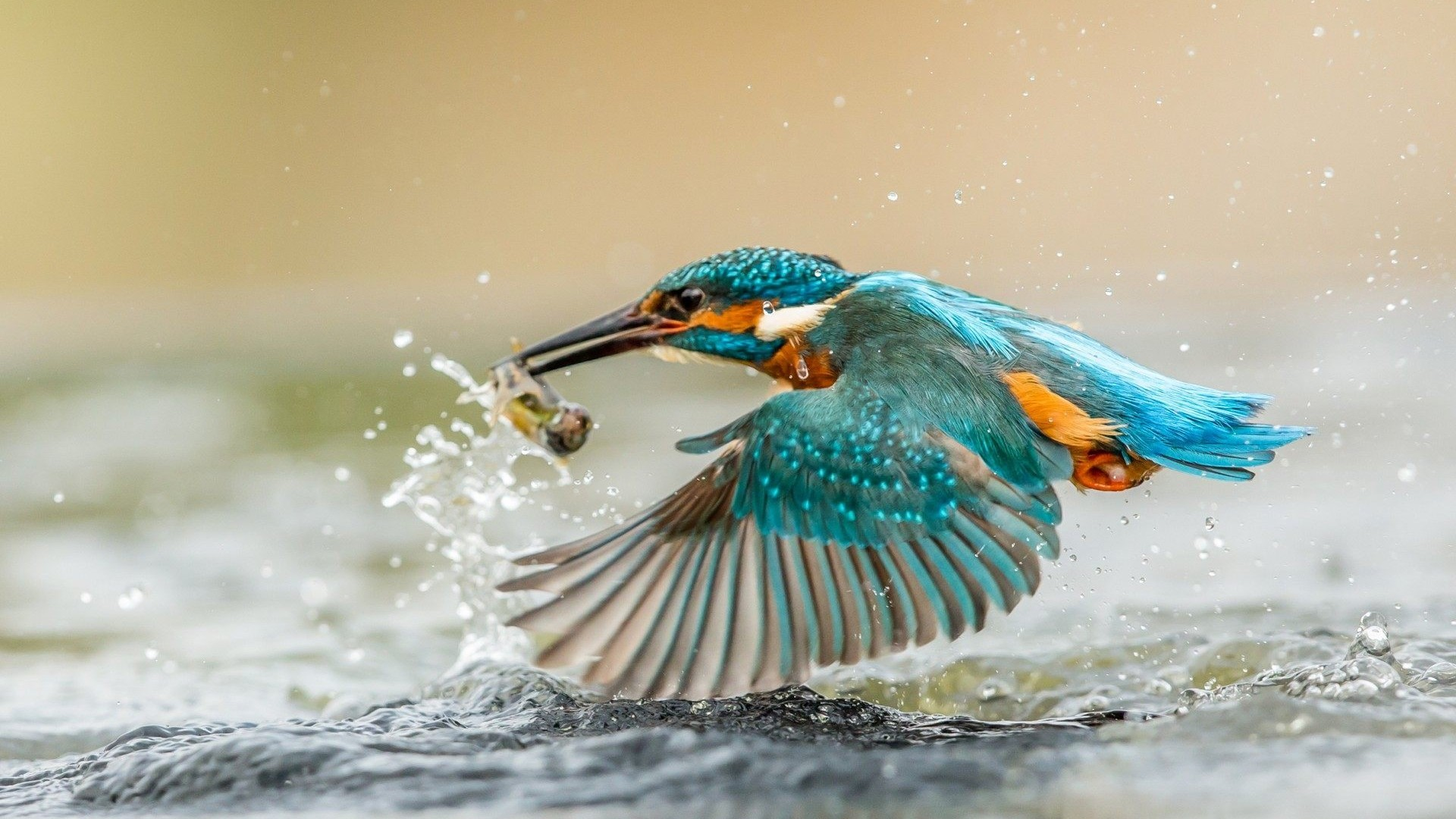 1920x1080 Kingfisher bird hunting fish wallpaper () Need #iPhone #6S #Plus # Wallpaper/ #Background for #IPhone6SPlus? Follow iPhone 6S Plus 3Wallpap…