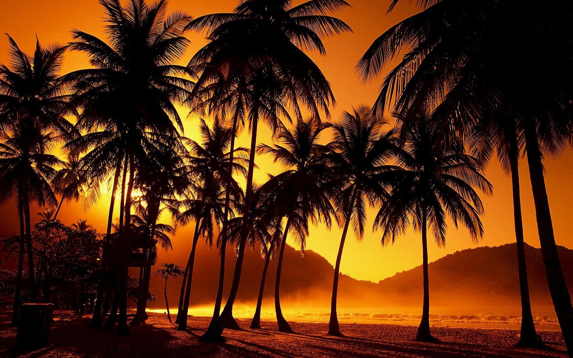 sunset palm trees wallpaper 62 images