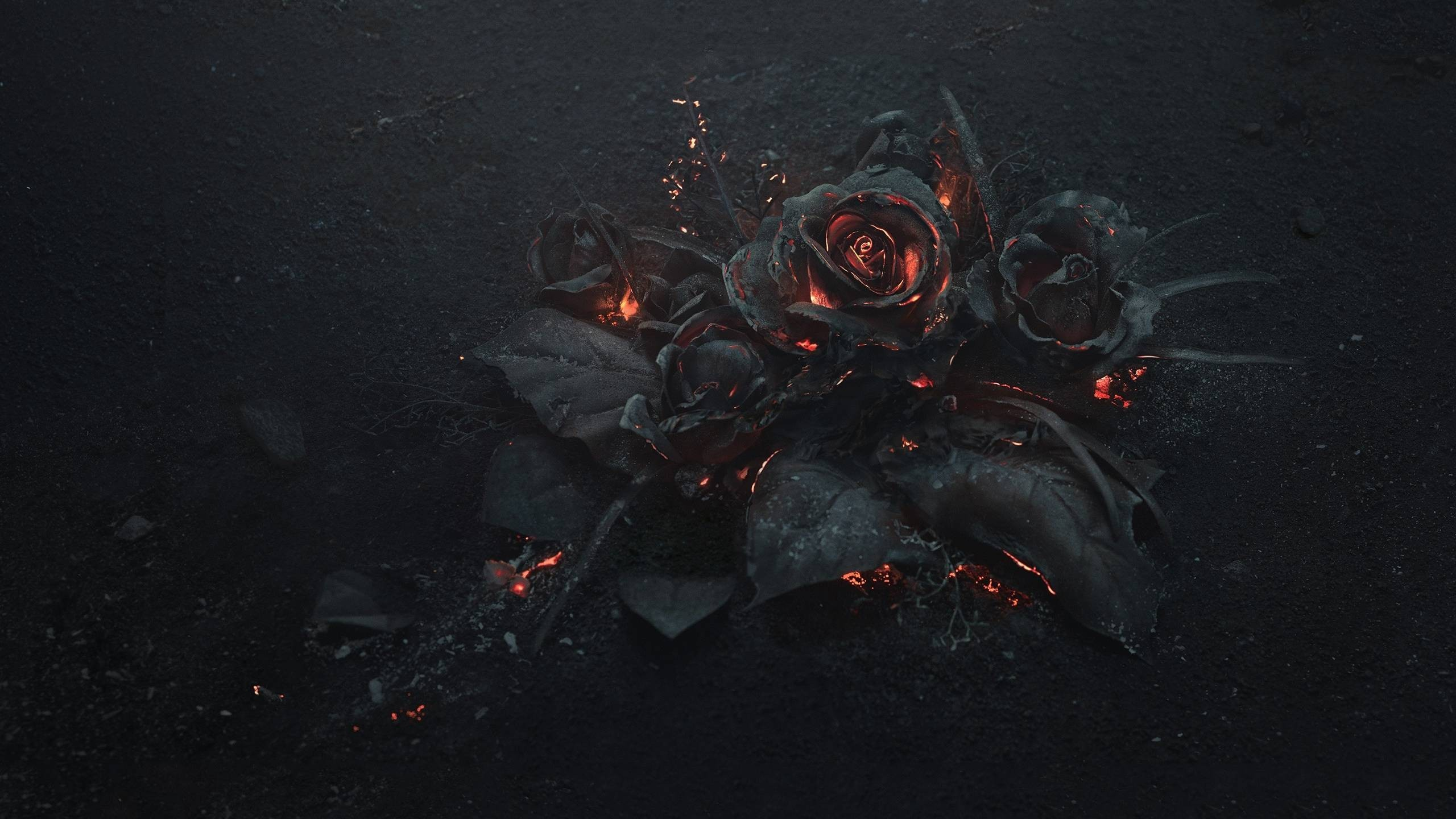 2560x1440 General  flowers rose fire Gothic