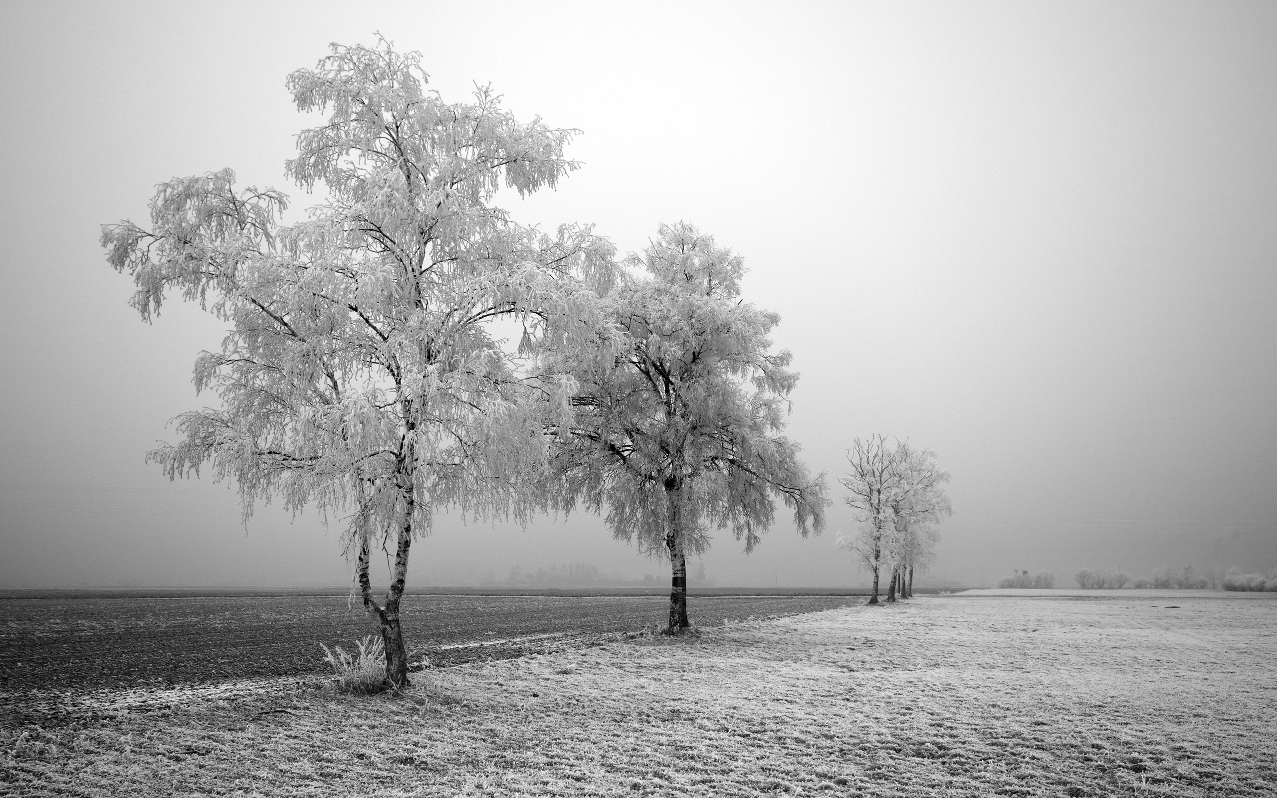 2560x1600 HD Wallpaper | Background ID:87656.  Photography Black & White