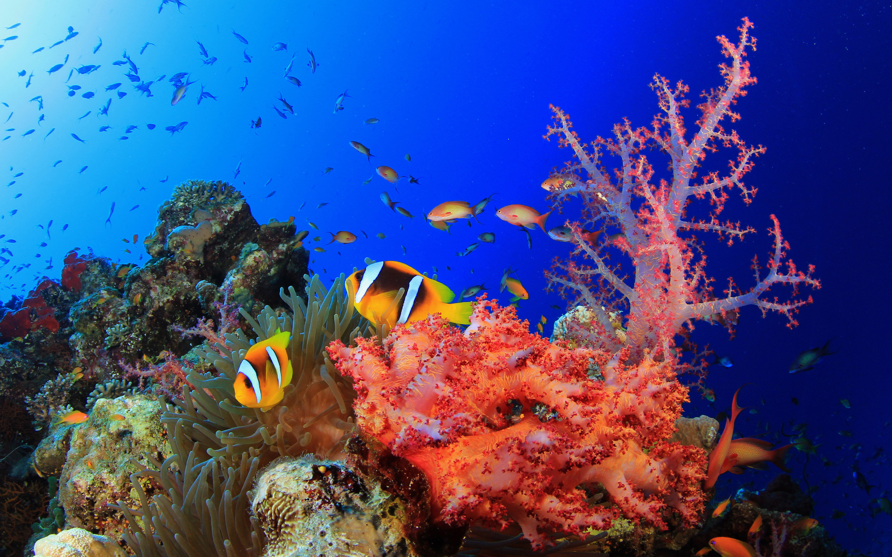2880x1800 Explore and share Colorful Coral Reef Wallpaper on WallpaperSafari