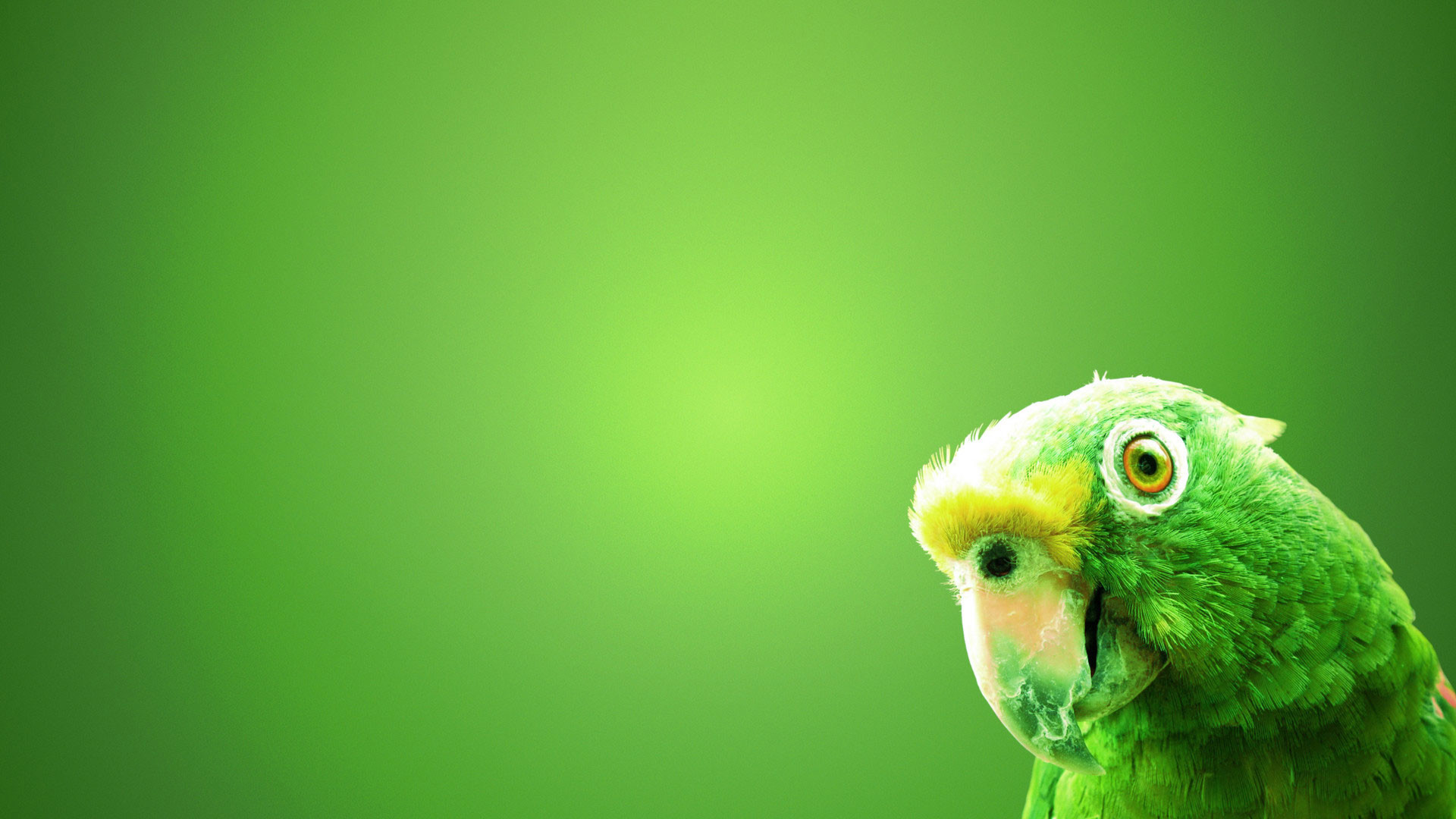 1920x1080 hd pics photos green background parrot cute desktop background wallpaper