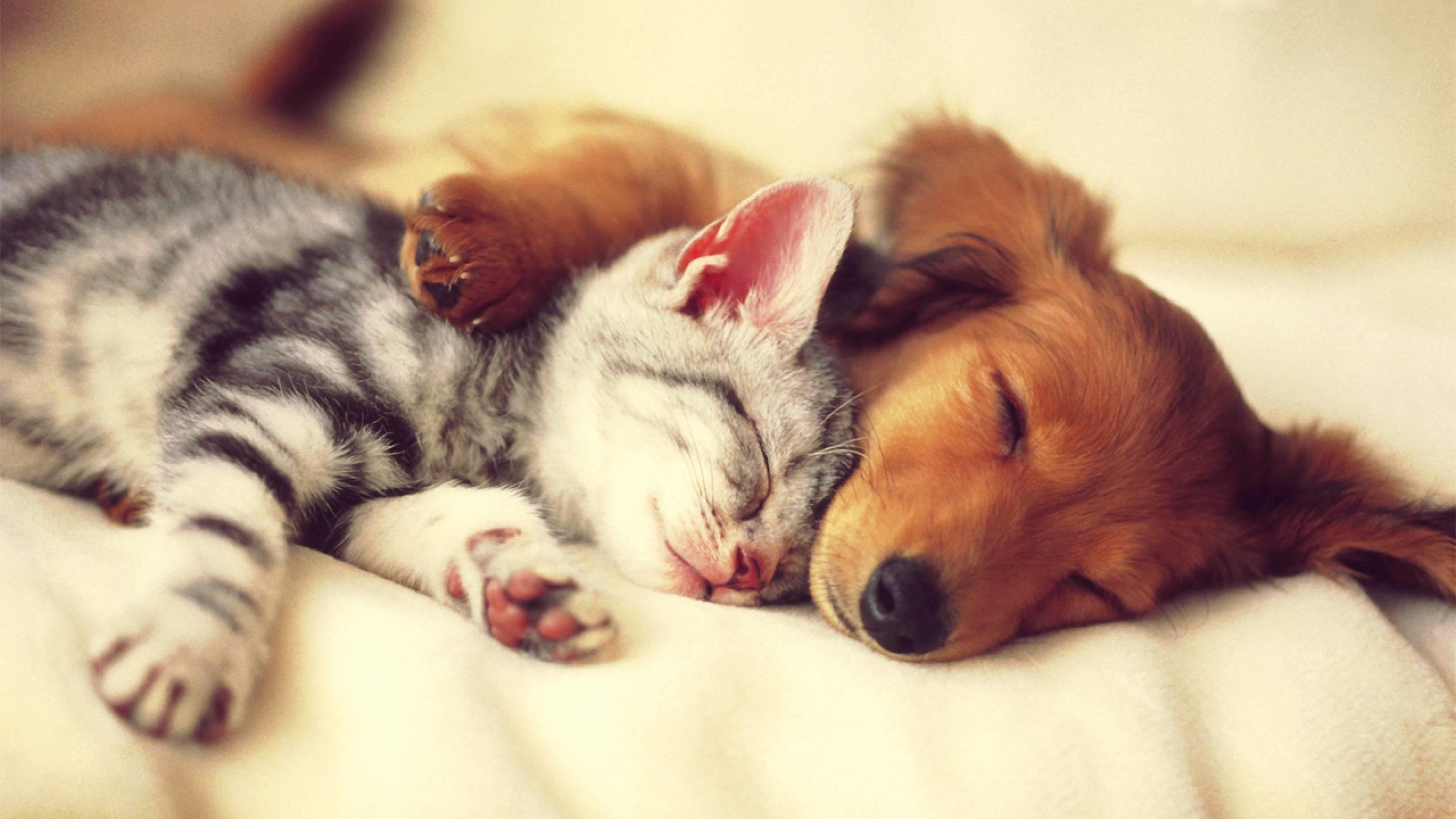 2560x1440 Cute Cat And Dog Sleep Wallpaper