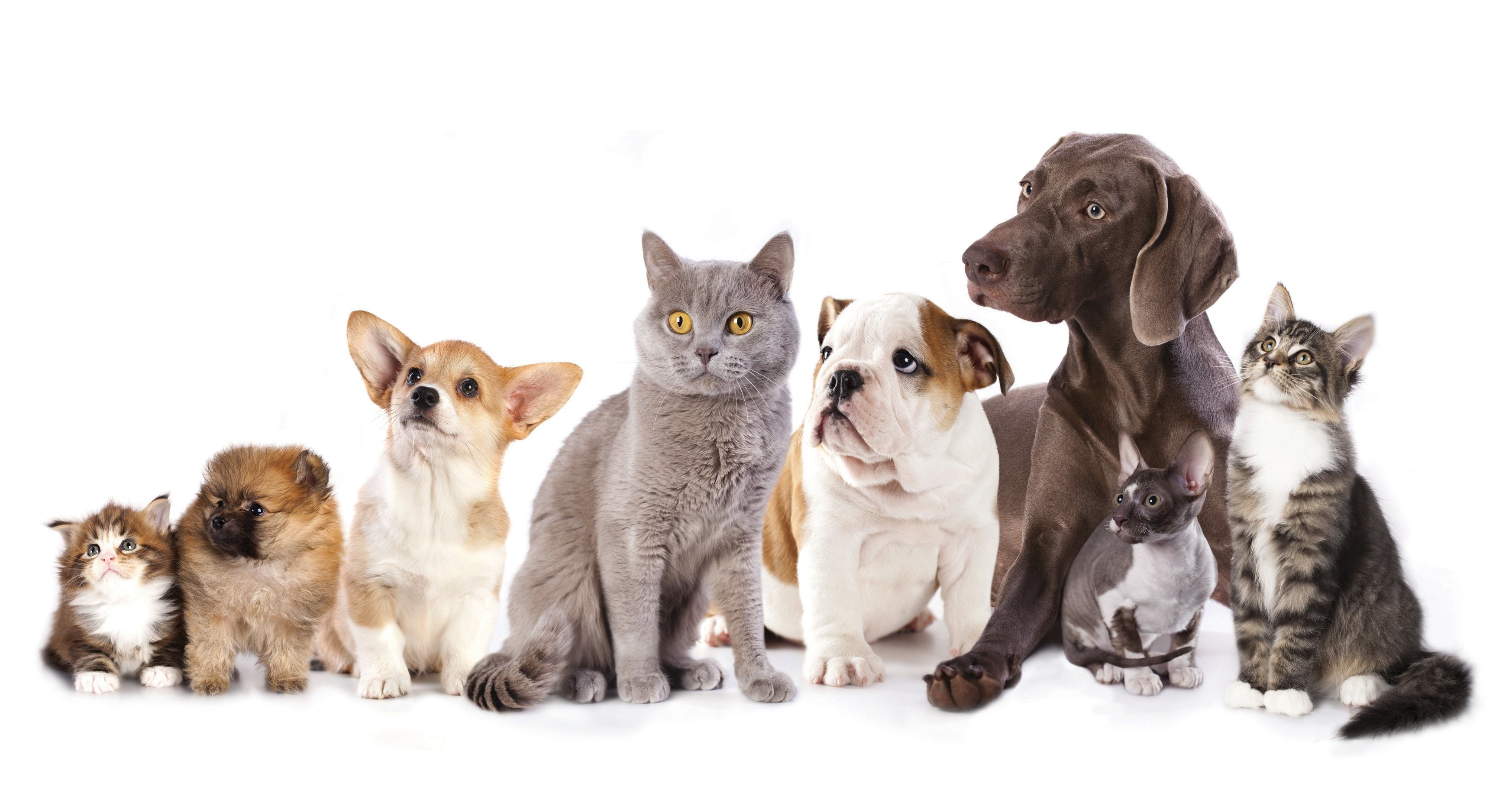 3492x1868 Dog And Cat Populations Are Approaching Human Numbers – Where Are .