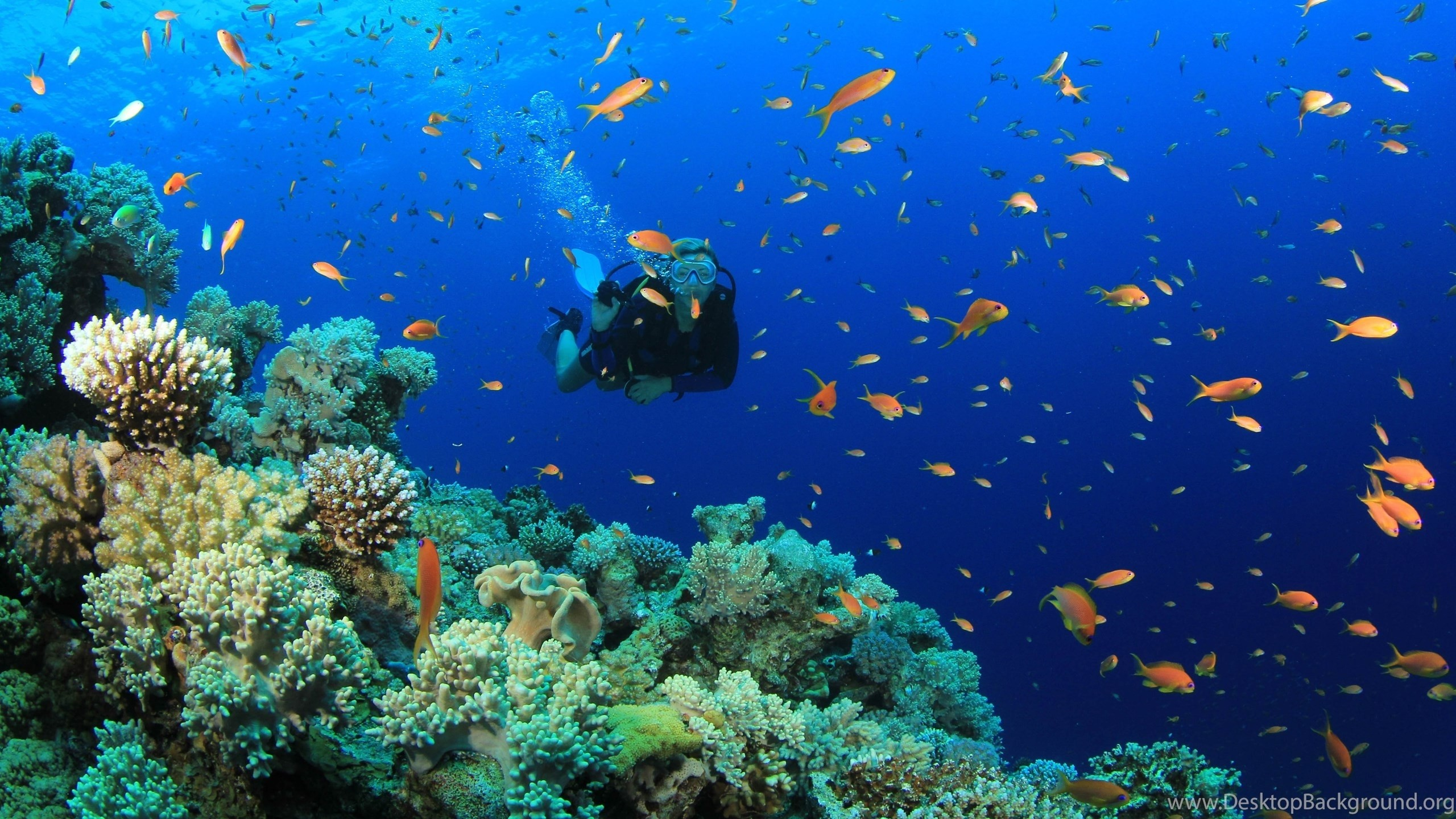 2560x1440 Title : scuba diving diver ocean sea underwater fish wallpapers 5184×2904.  Dimension : 2560 x 1440. File Type : JPG/JPEG