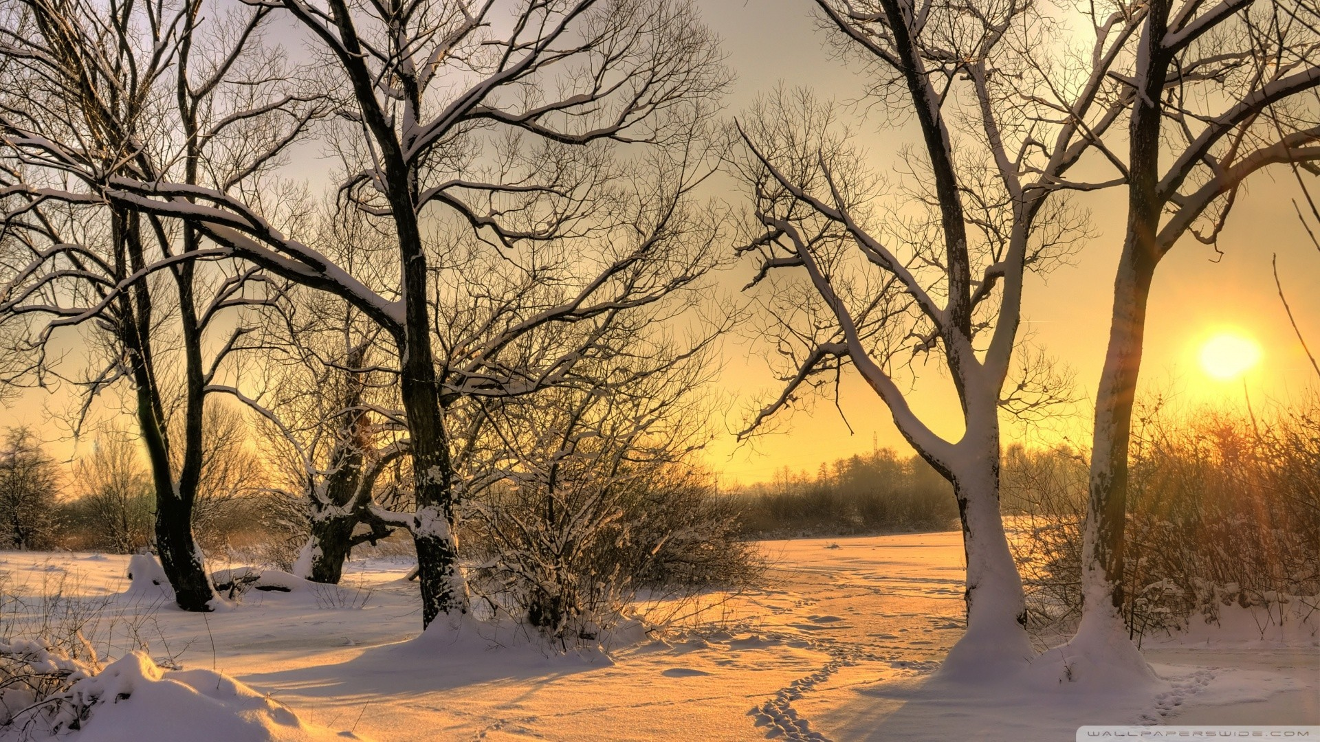 1920x1080 Winter - Footsteps Winter Sunlight Snow Trees Desktop Pictures for HD 16:9  High Definition