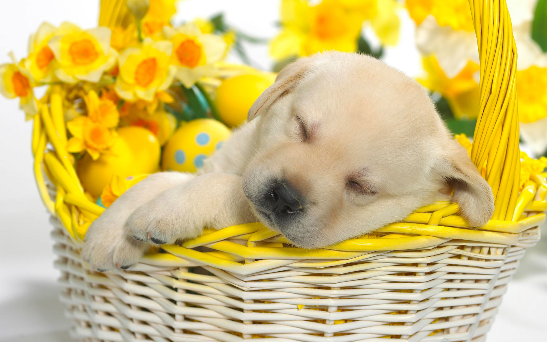 1920x1200 Springtime Snooze Wallpapers | HD Wallpapers