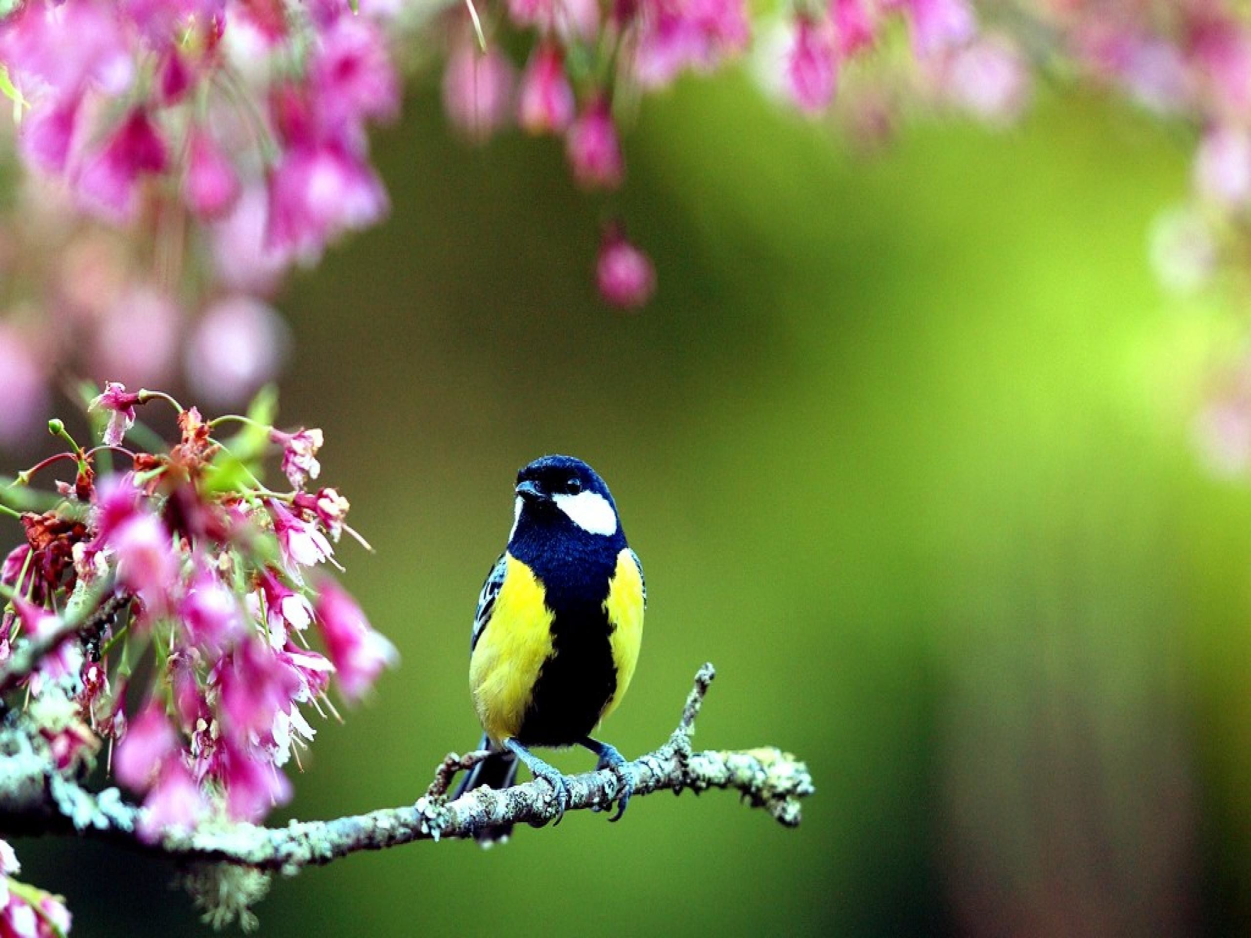 2560x1920 Spring Flowers And Birds Wallpaper W Impex Wallimpex Com